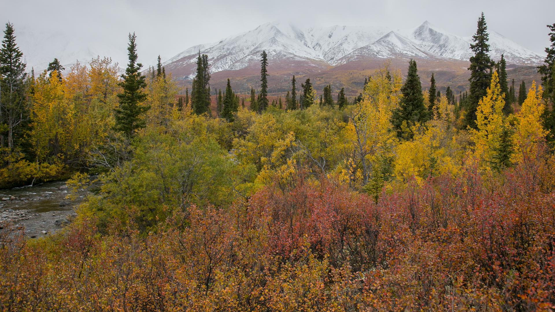 Yukon D11-52.jpg
