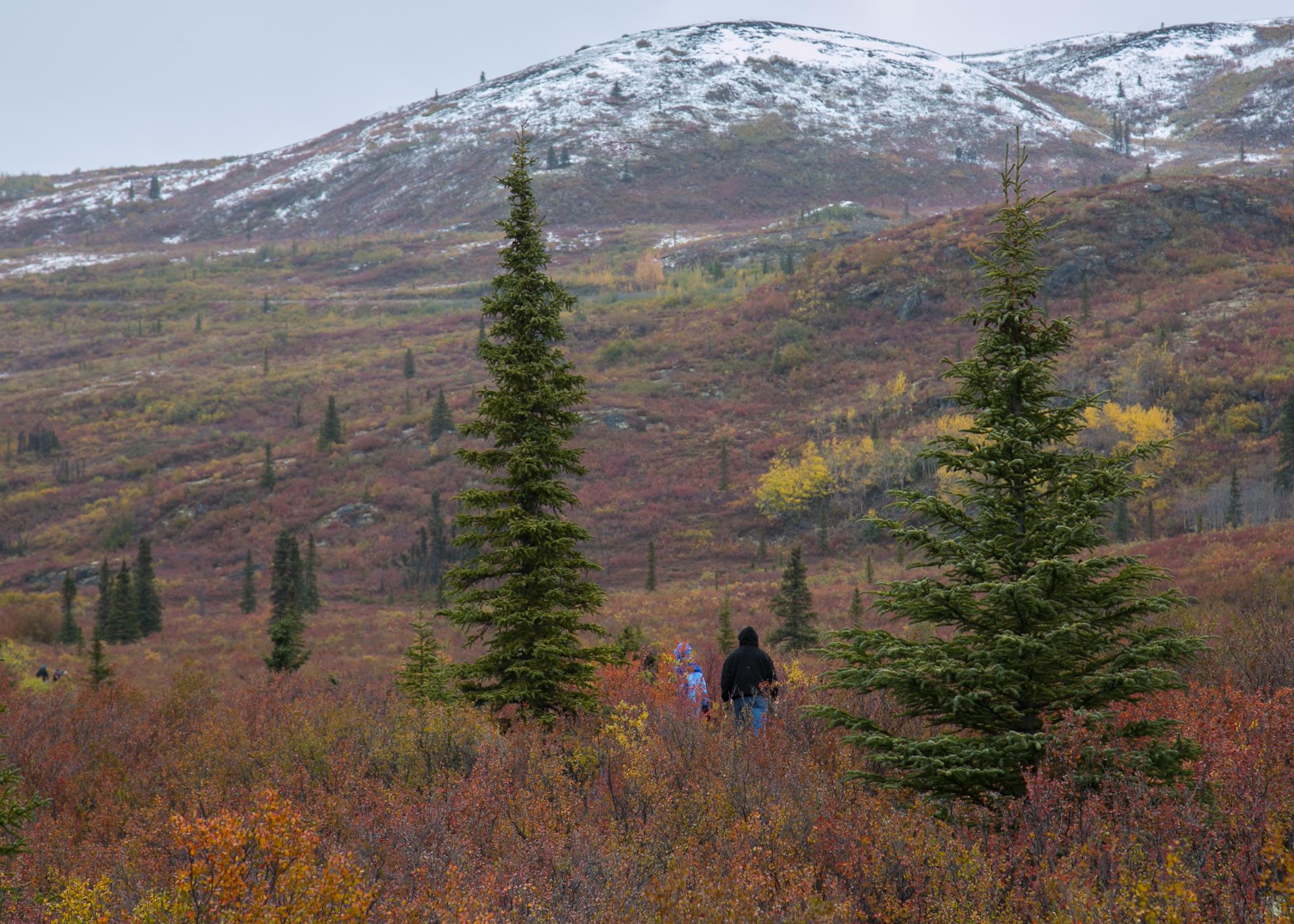 Yukon D11-53.jpg
