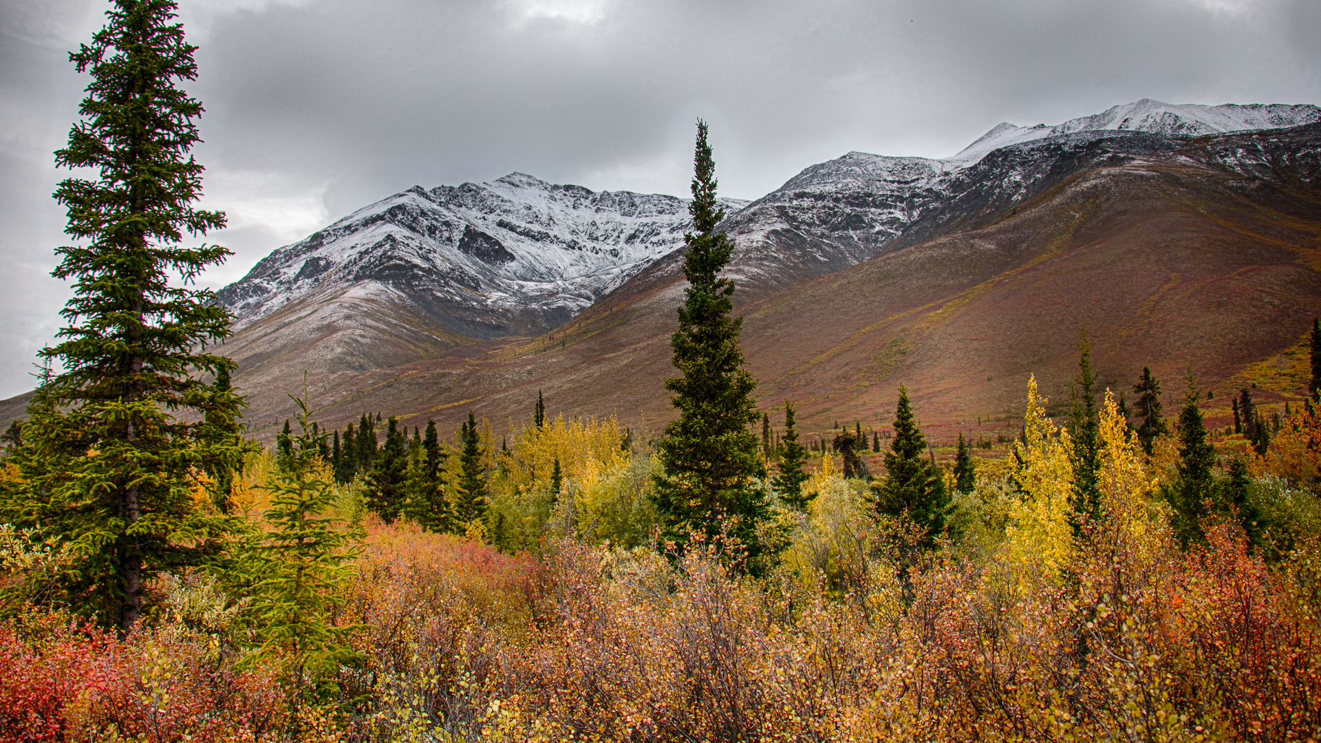 Yukon D11-56.jpg