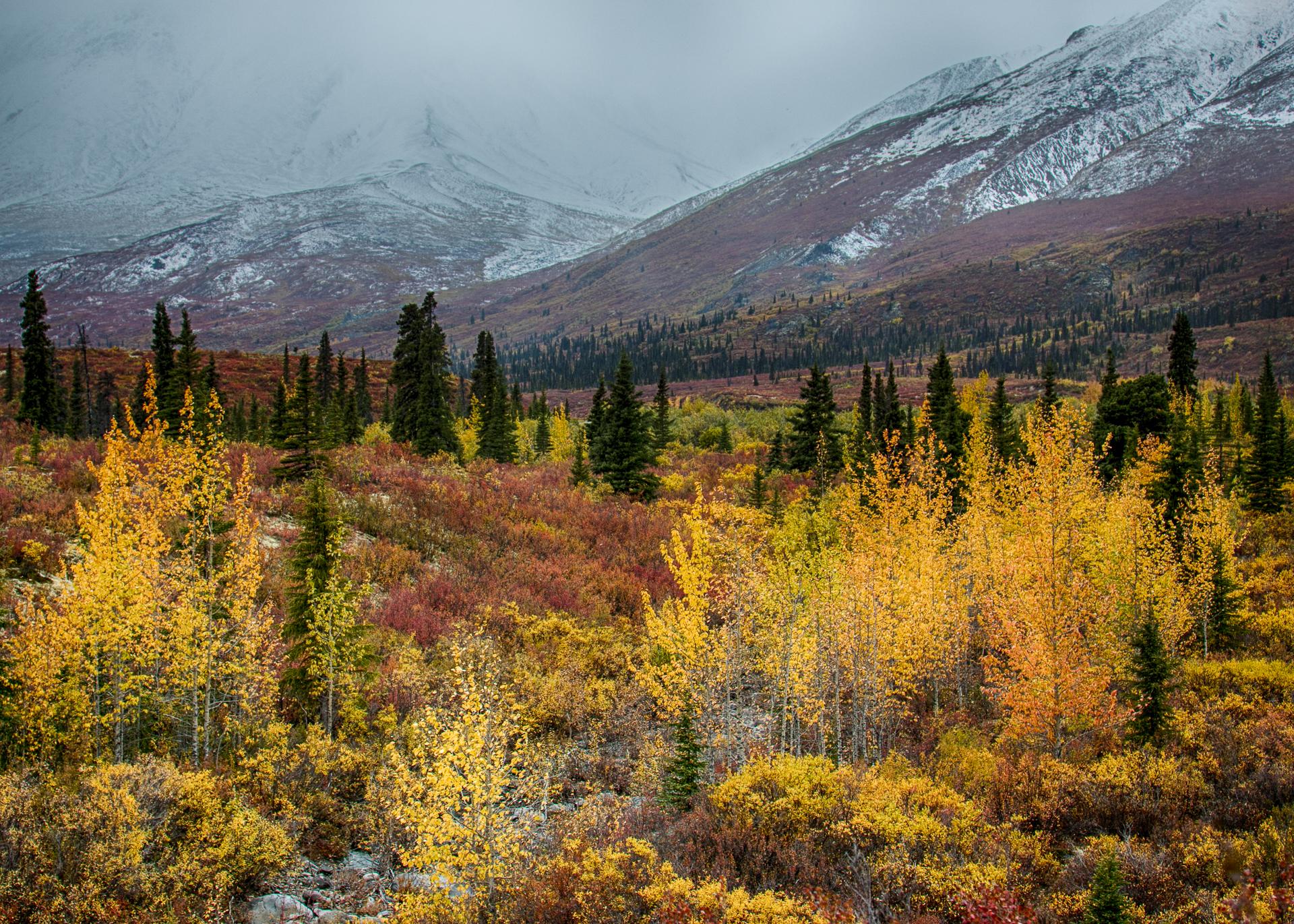Yukon D11-59.jpg