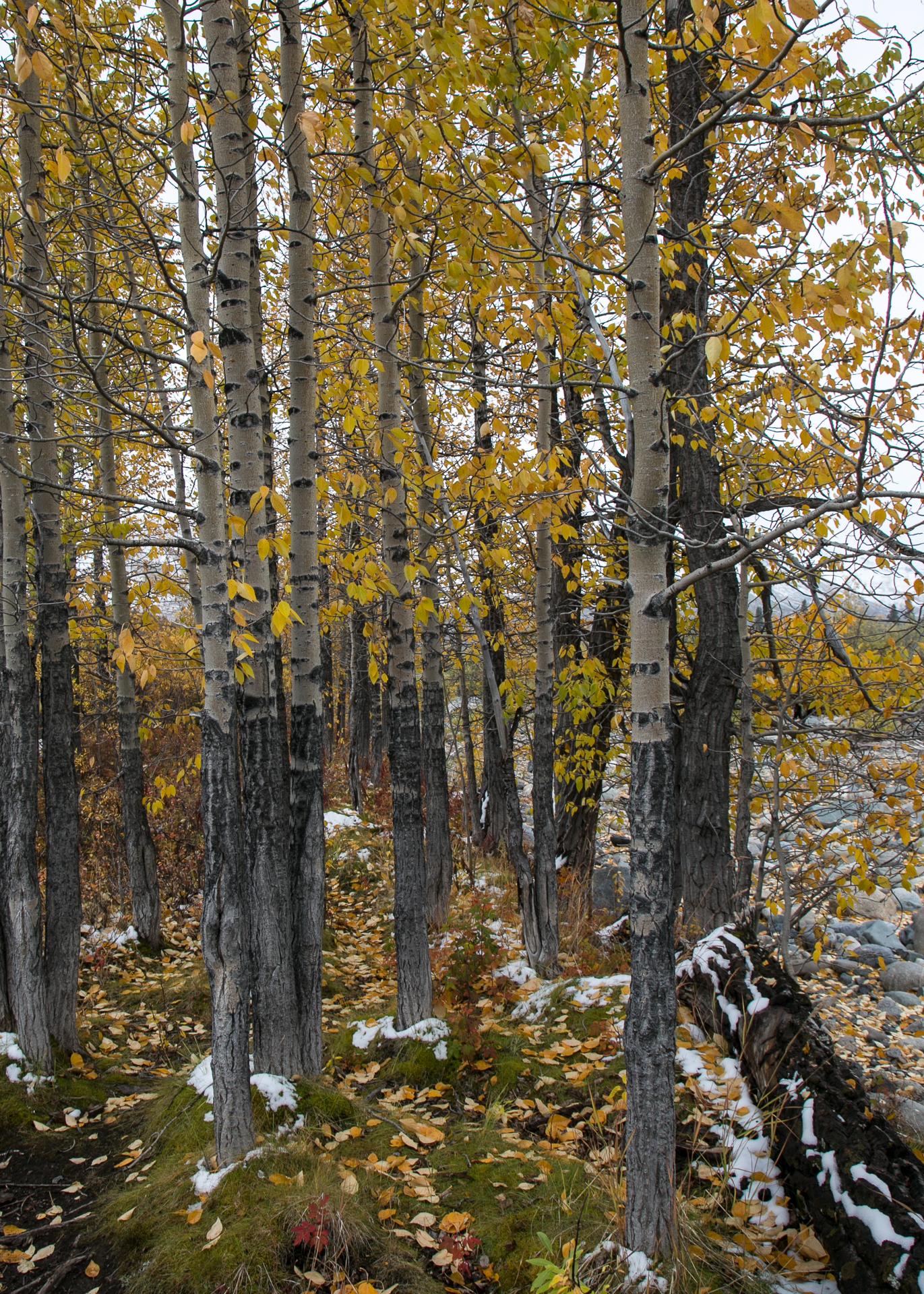 Yukon D11-70.jpg