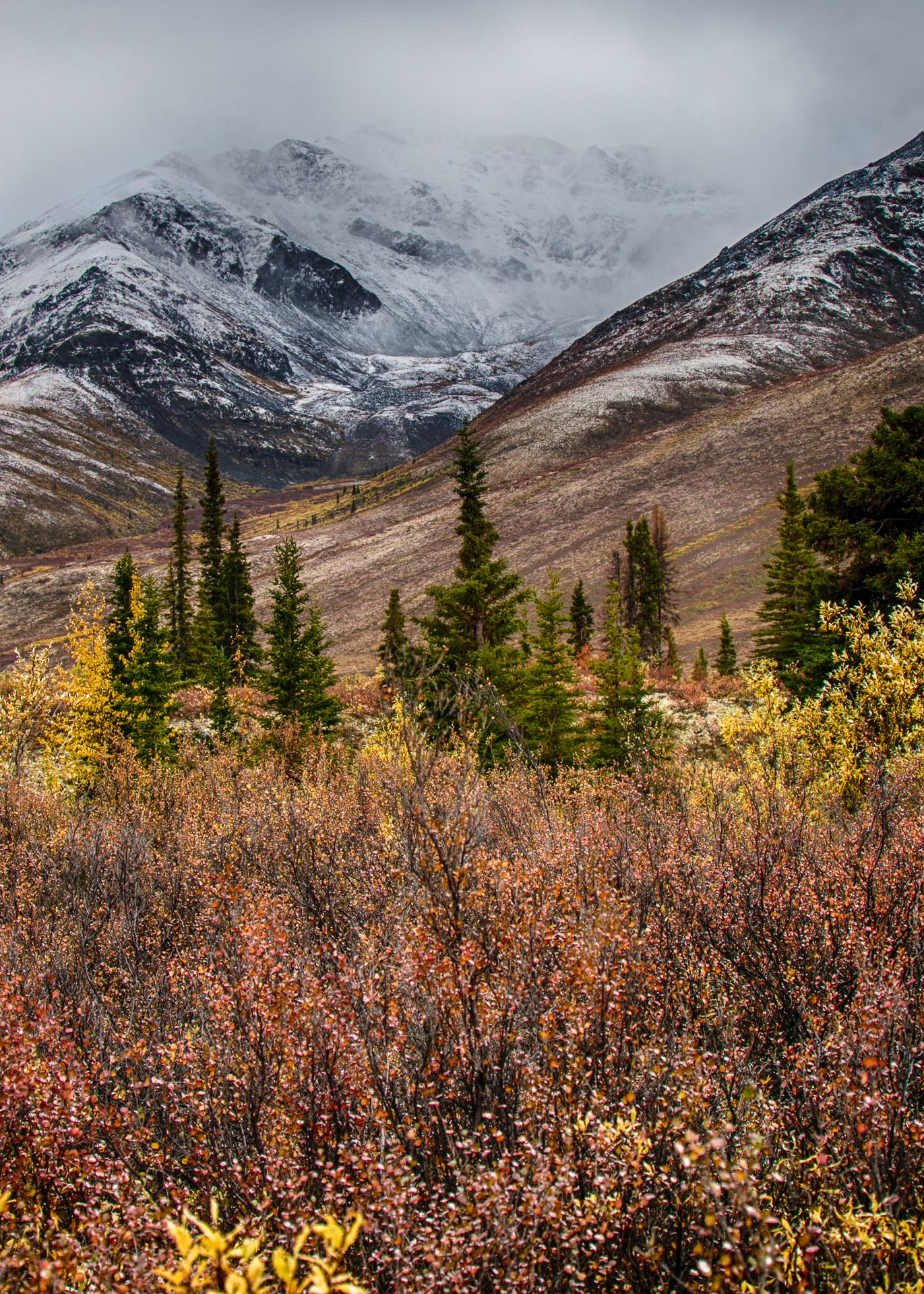 Yukon D11-74.jpg