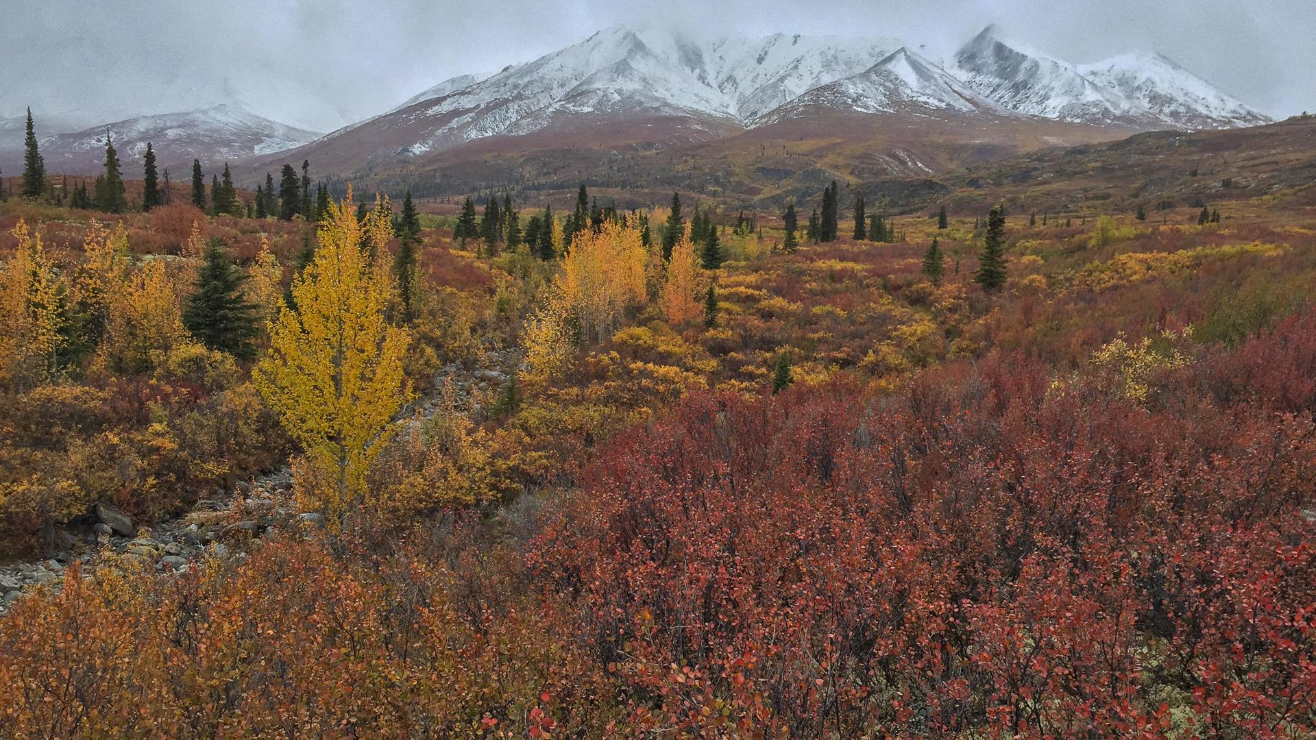 Yukon D11-79.jpg