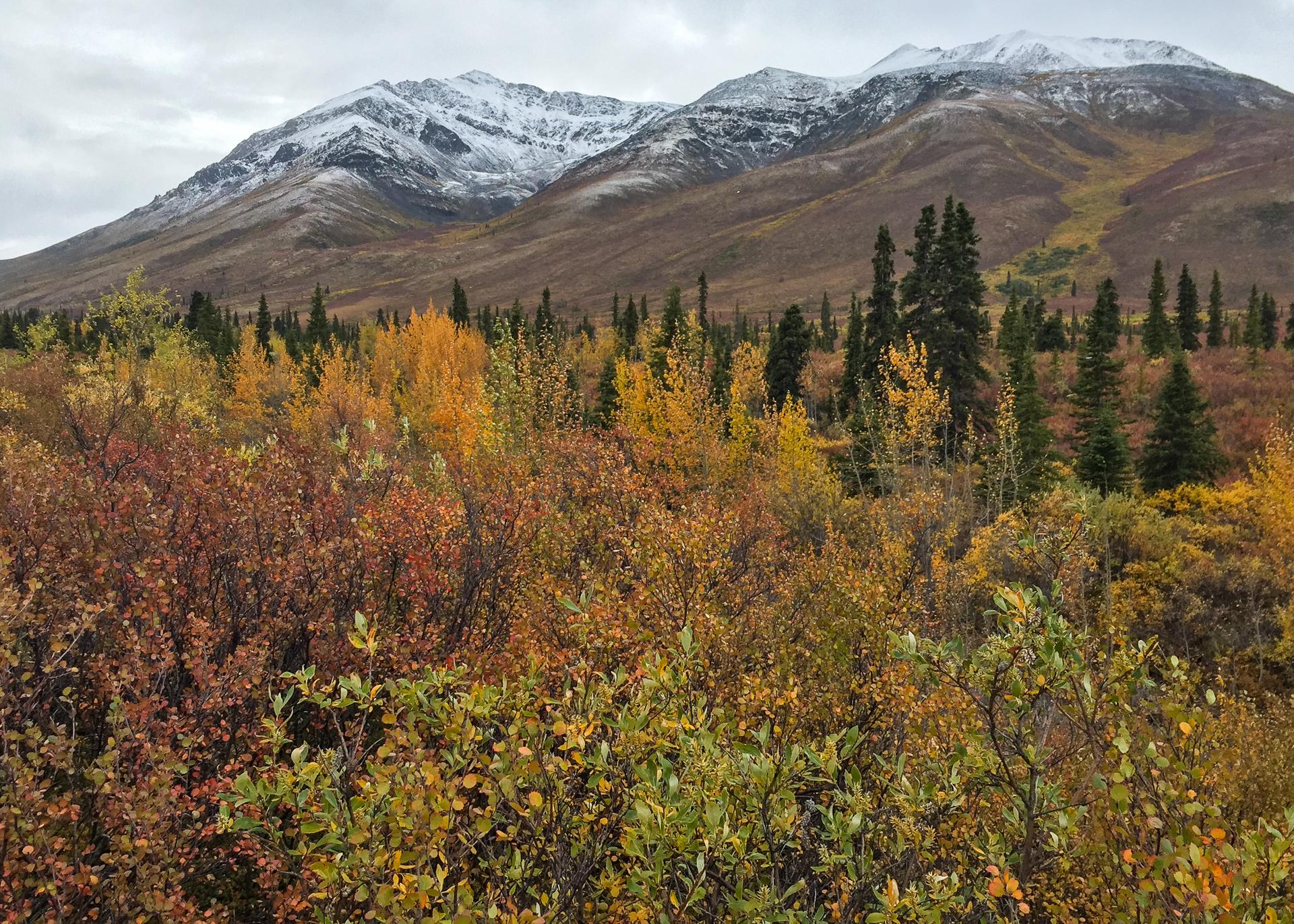 Yukon D11-81.jpg