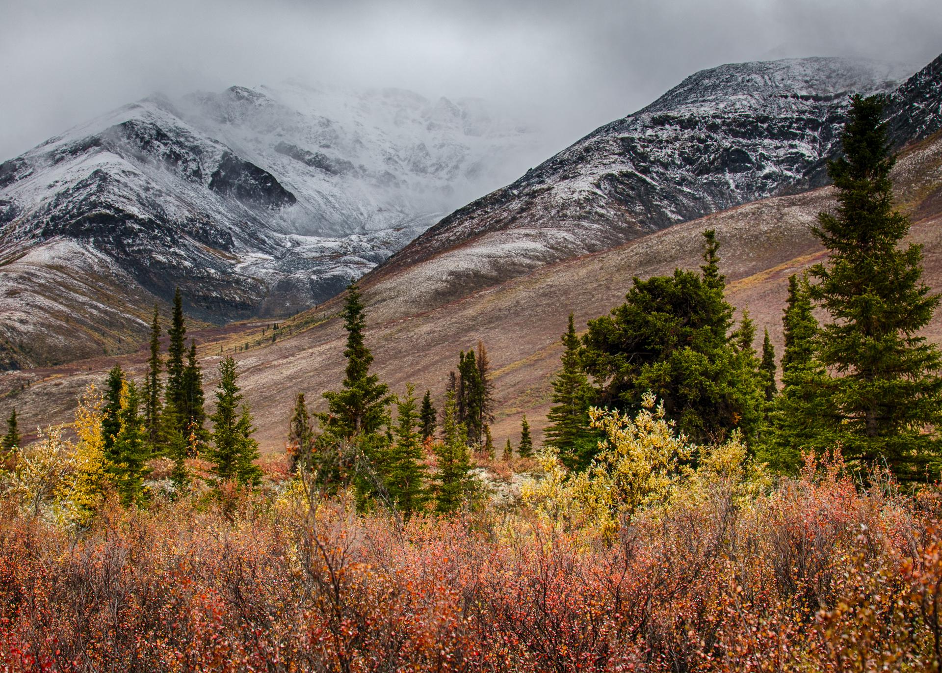 Yukon D11-76.jpg