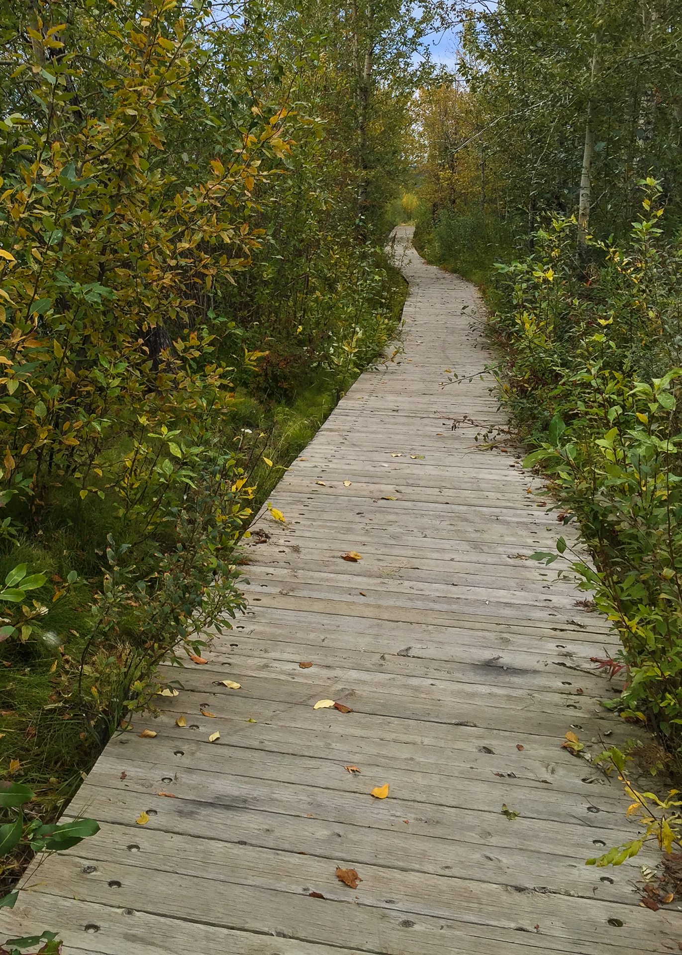 The riverside boardwalk in Carmacks.