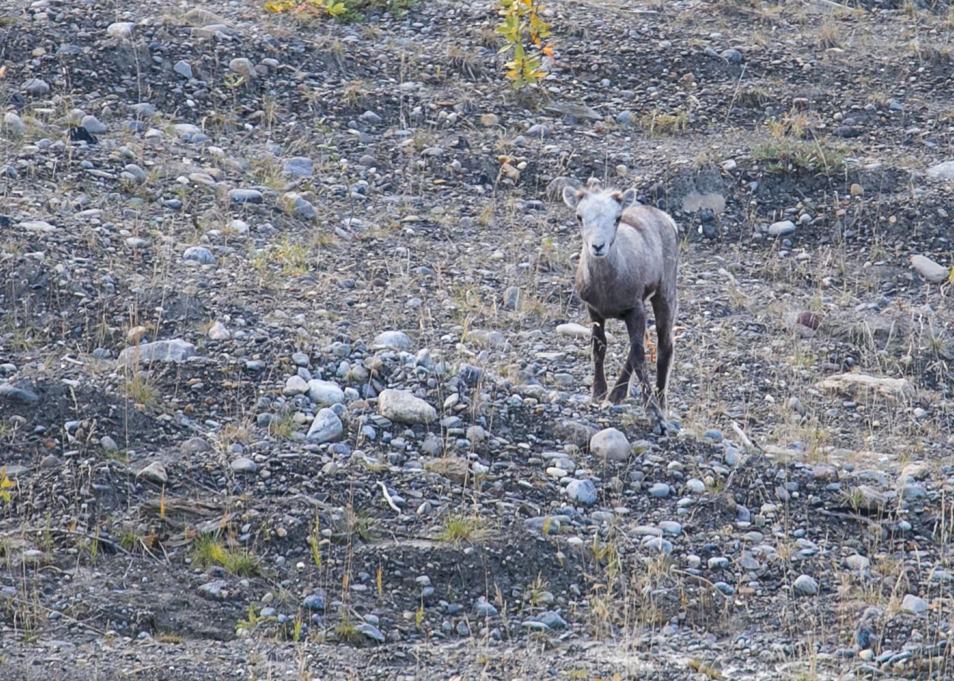 Yukon D16-4.jpg
