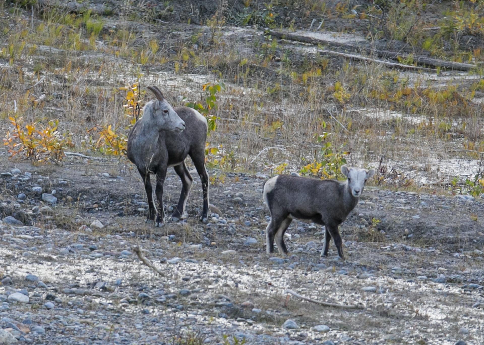 Yukon D16-17.jpg