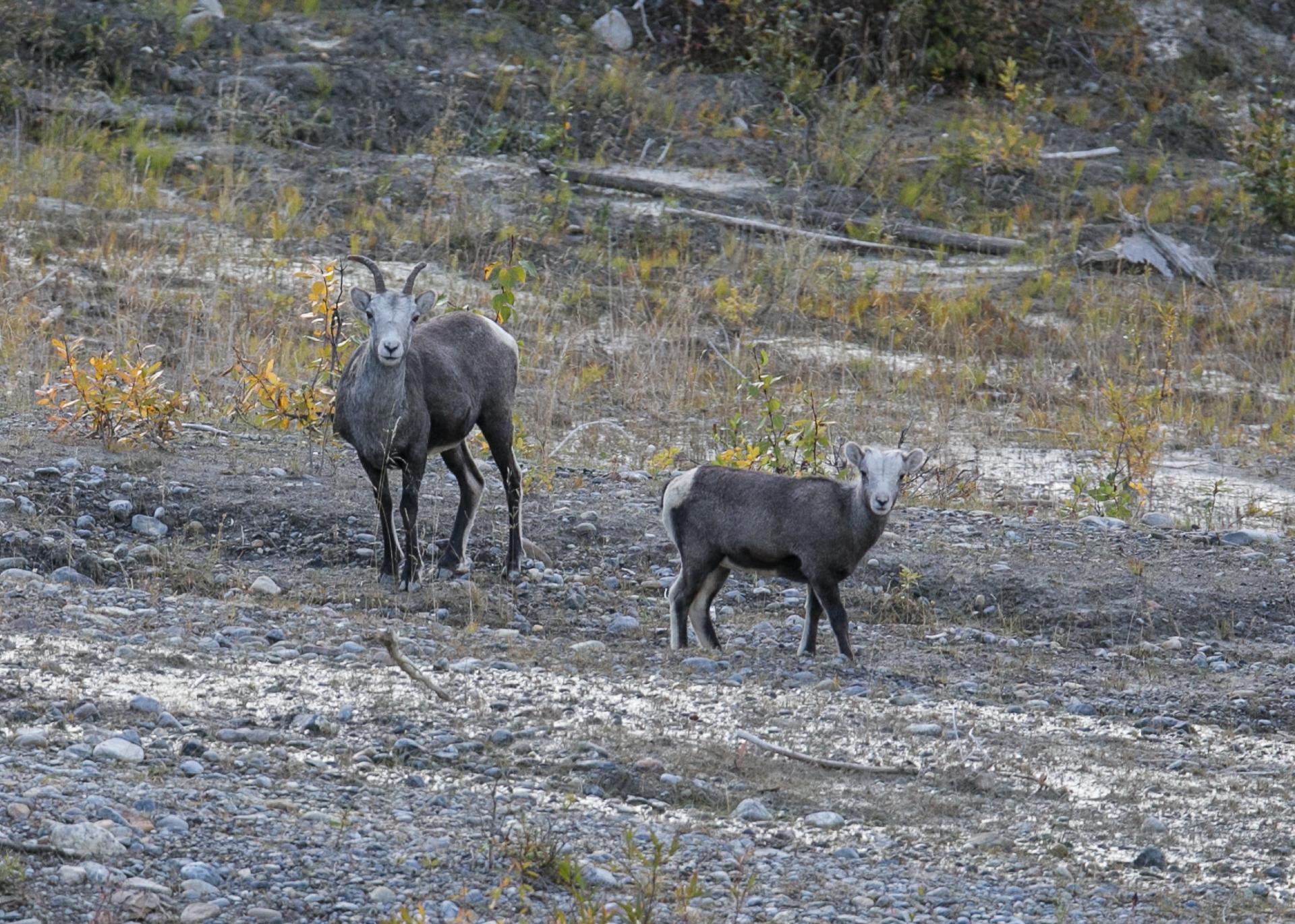 Yukon D16-18.jpg