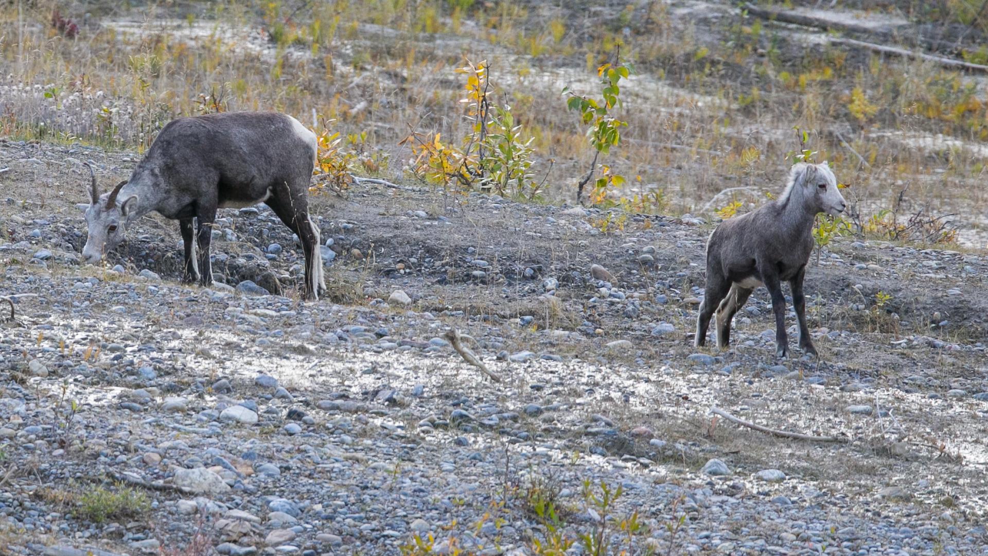 Yukon D16-21.jpg