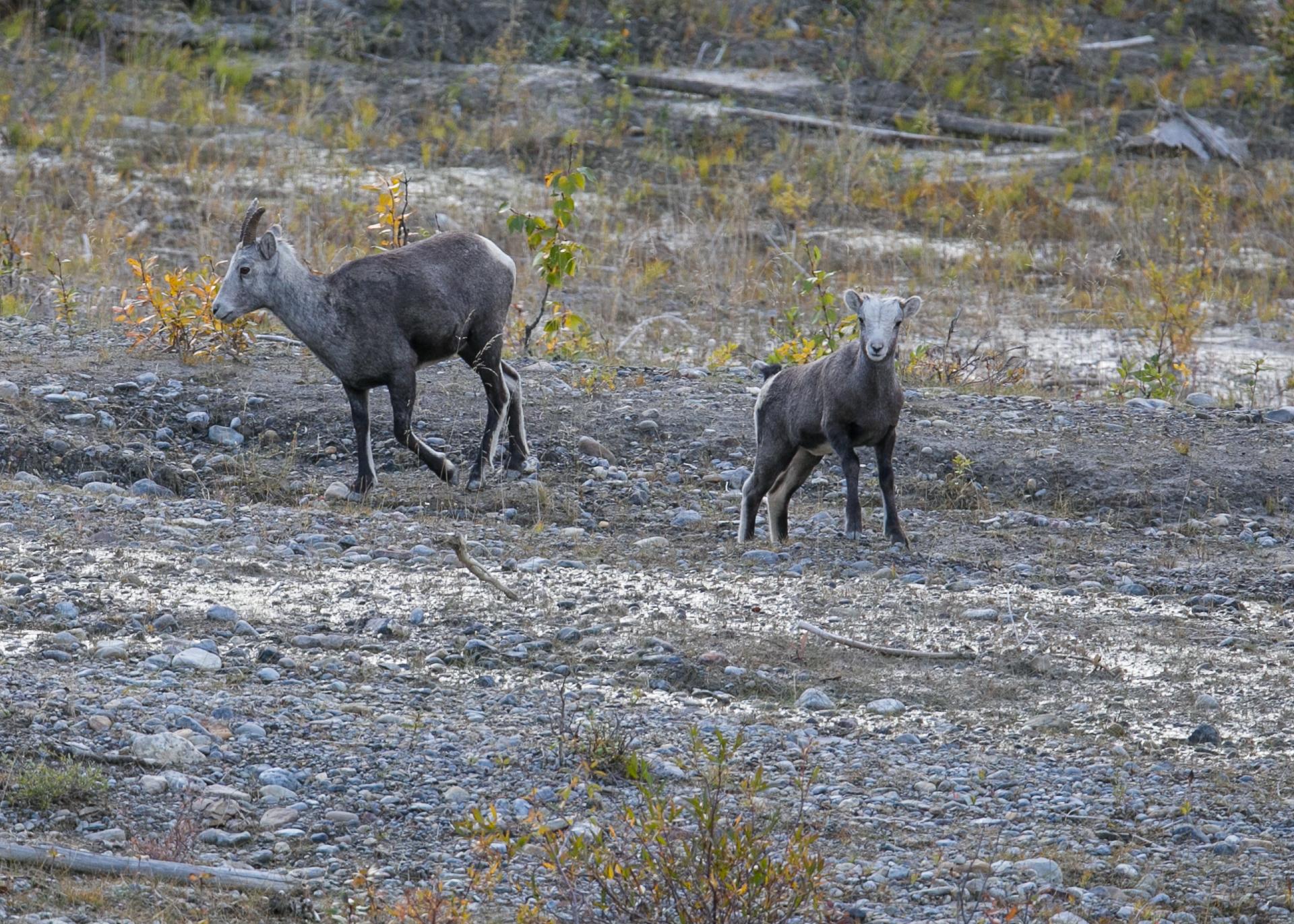 Yukon D16-20.jpg