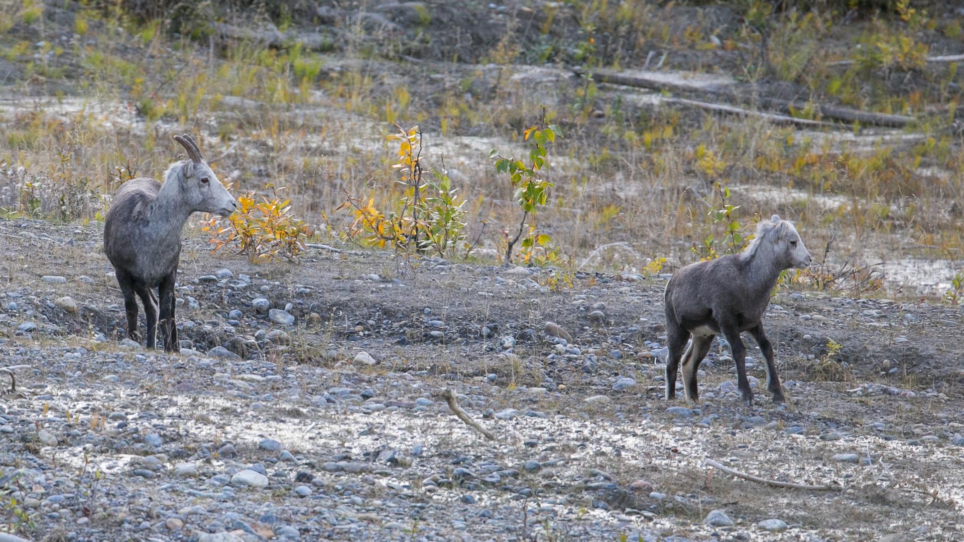Yukon D16-22.jpg