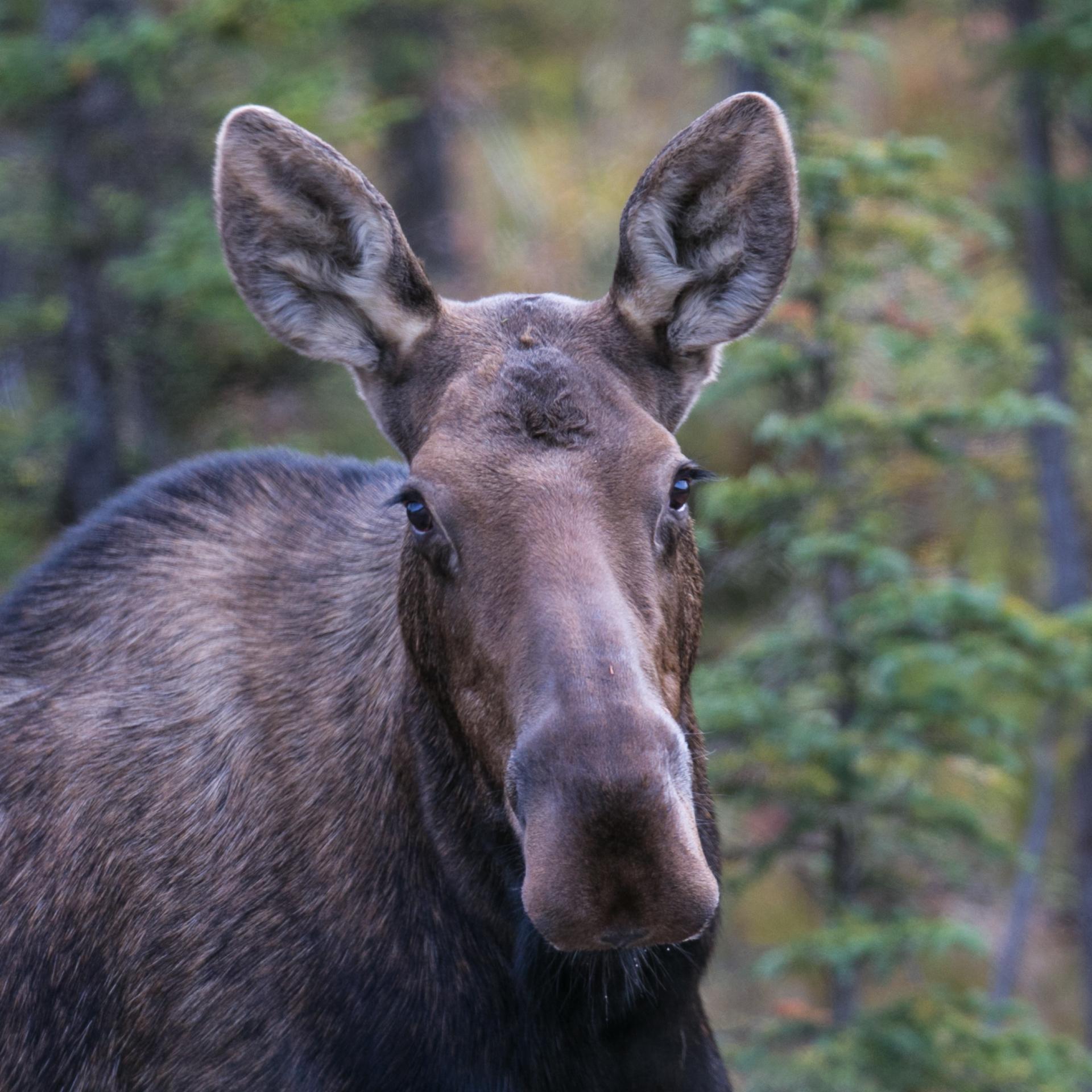 Yukon D16-37.jpg