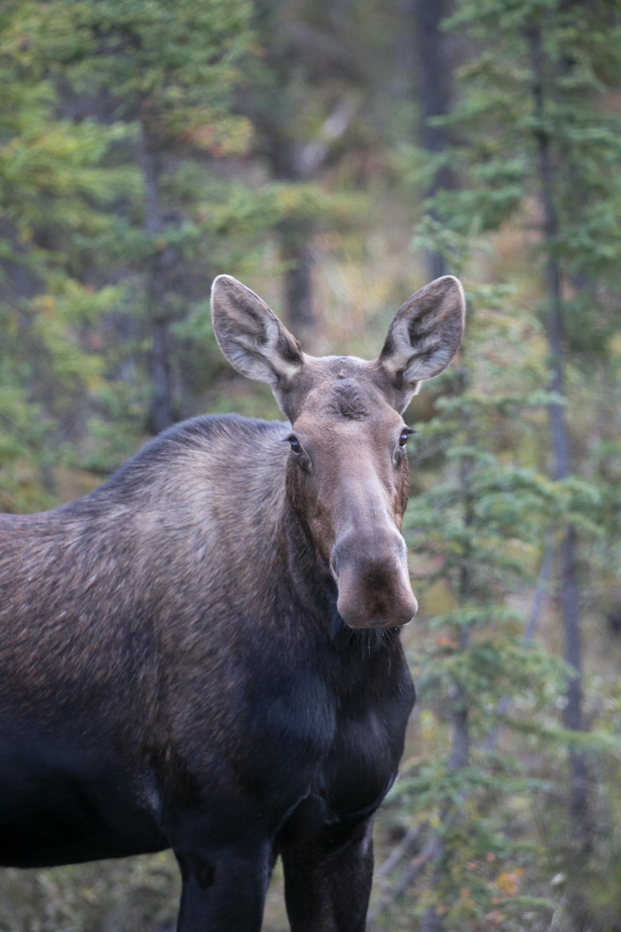 Yukon D16-38.jpg