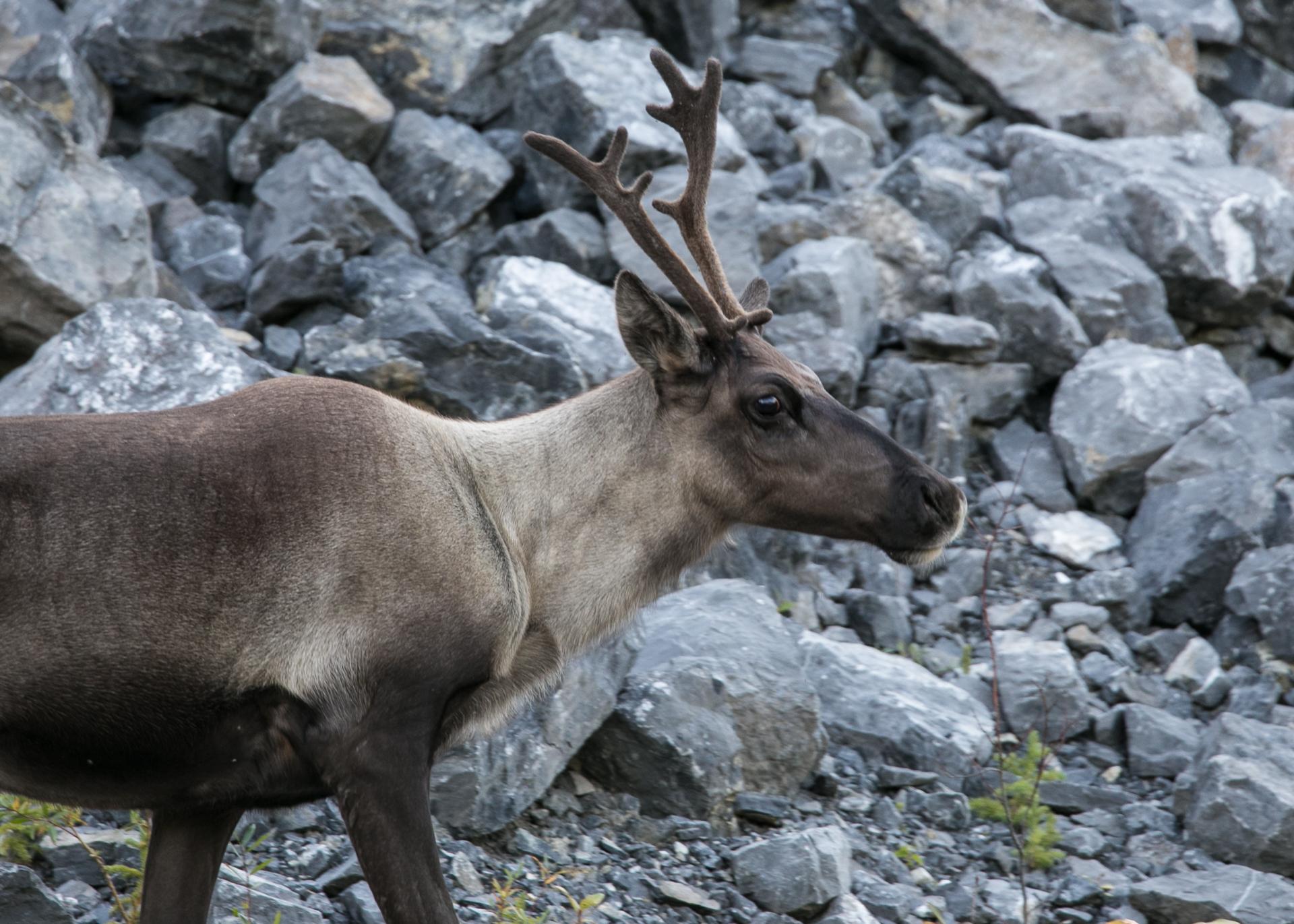 Yukon D16-45.jpg