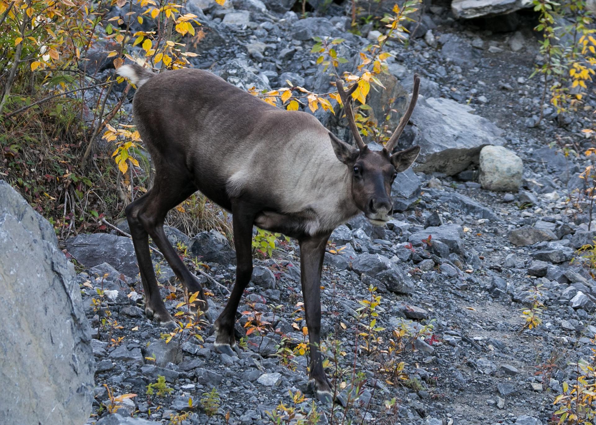 Yukon D16-48.jpg