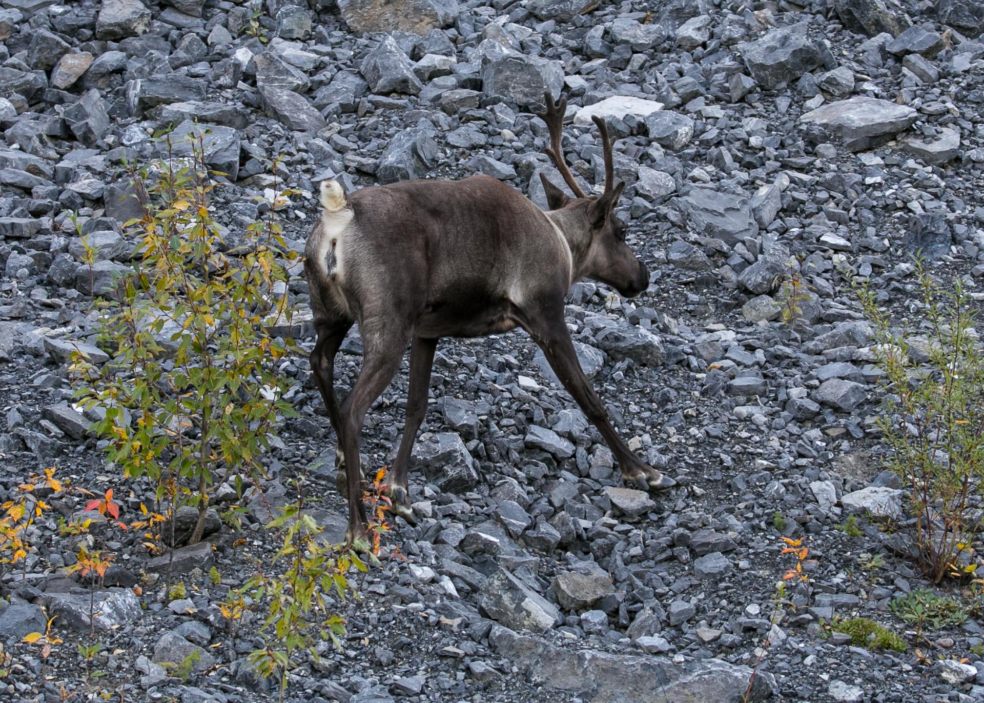 Yukon D16-44.jpg