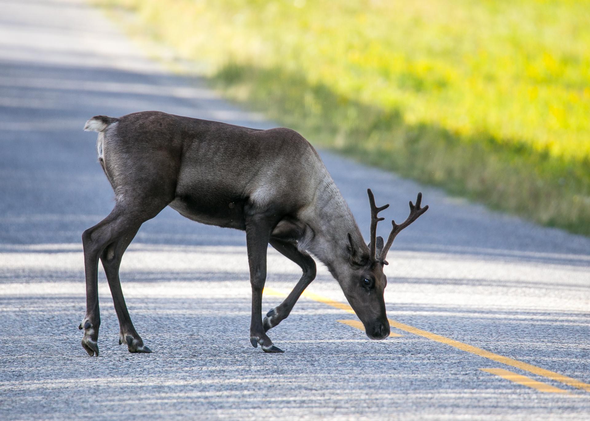 Yukon D16-50.jpg