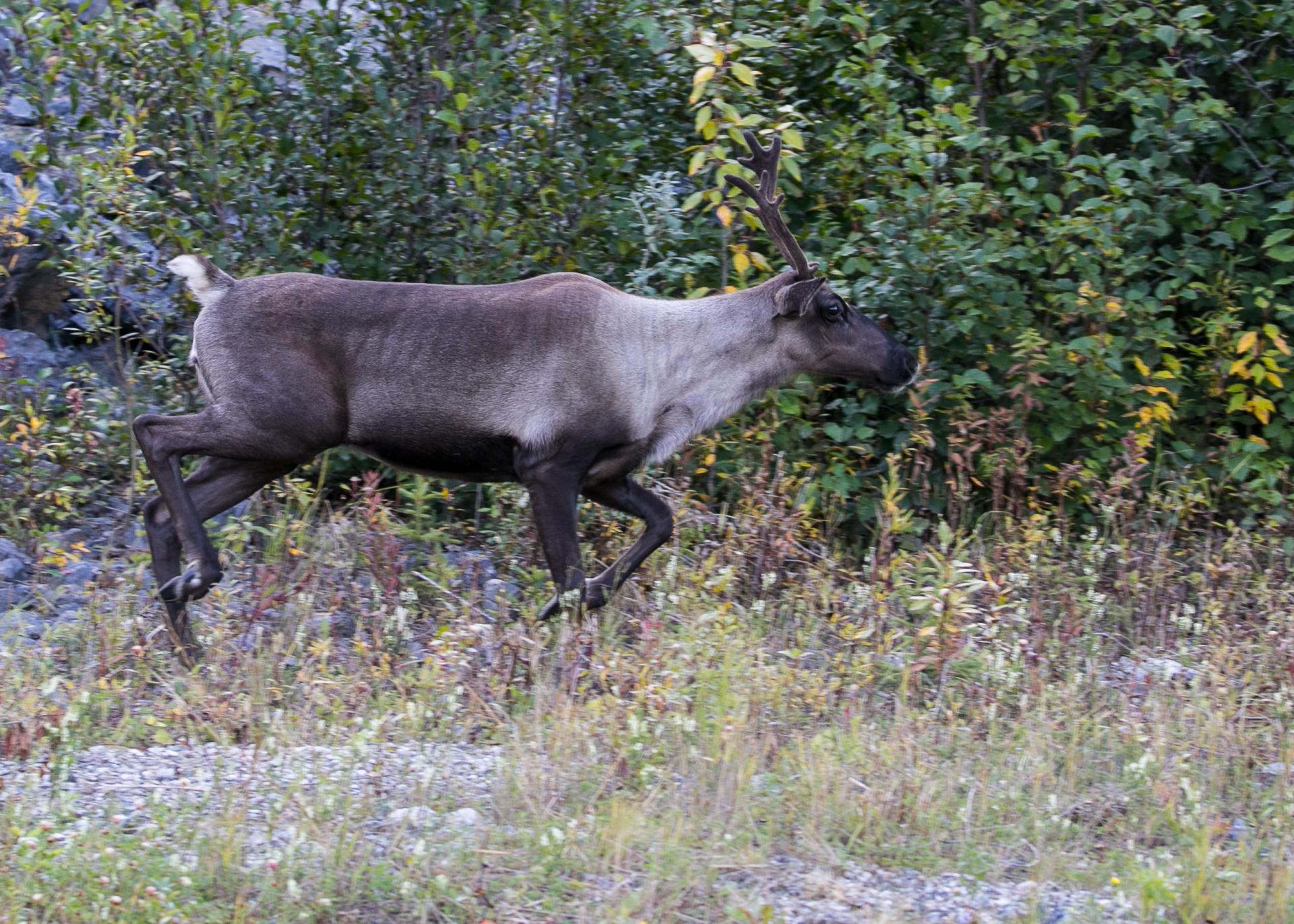 Yukon D16-49.jpg