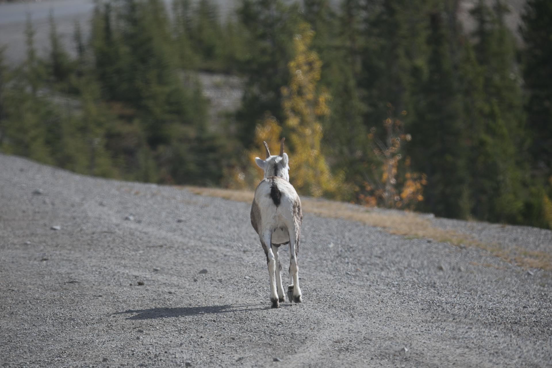 Yukon D16-61.jpg