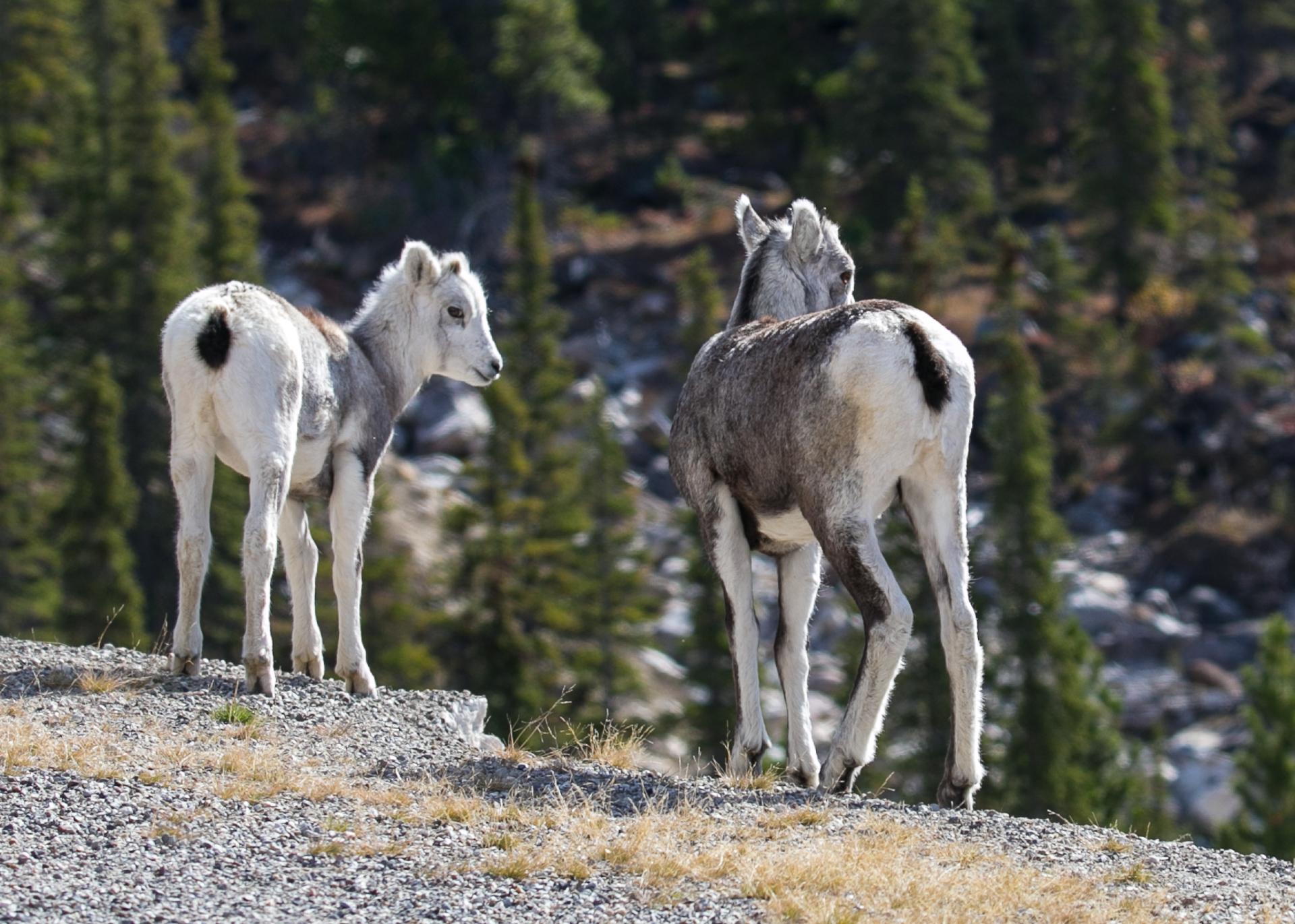 Yukon D16-64.jpg