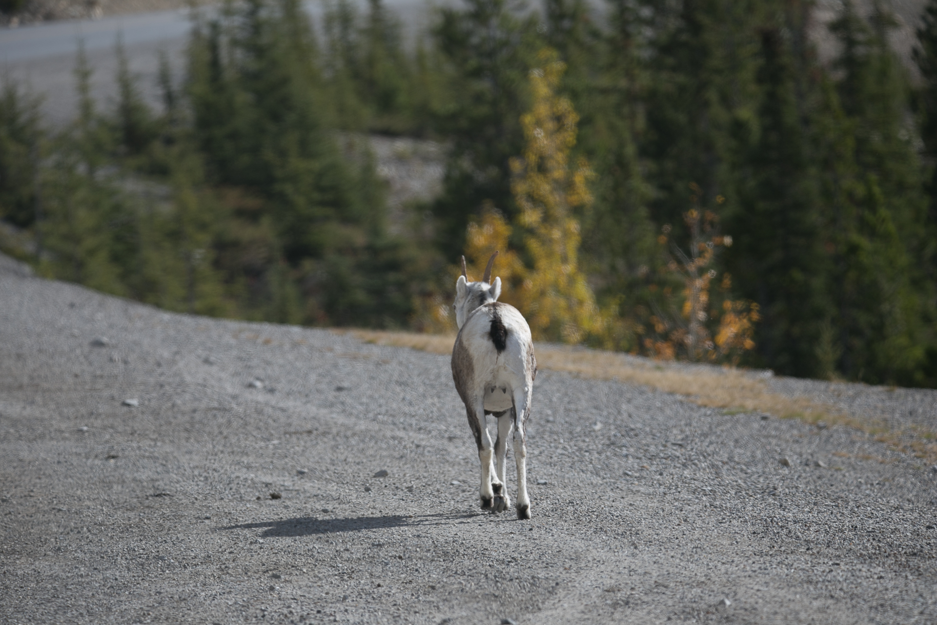 Yukon D16-62.jpg