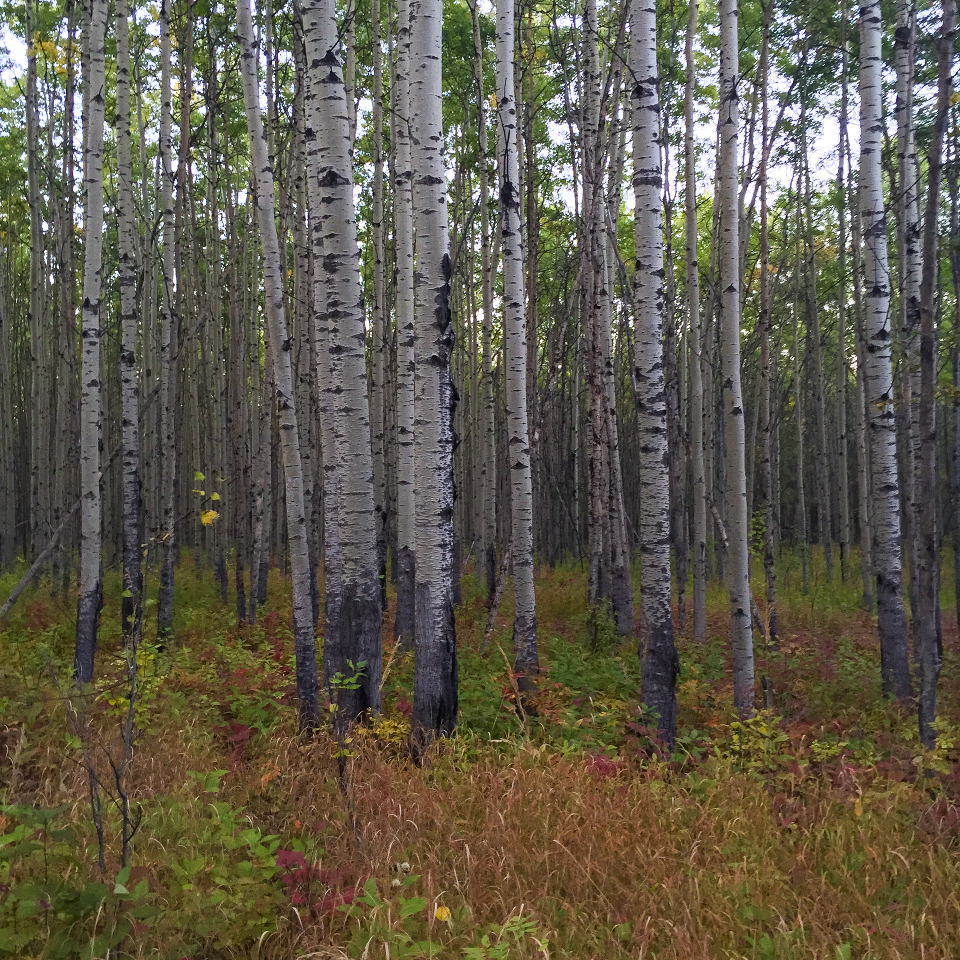 The forest around our campsite was also heading into fall colours.