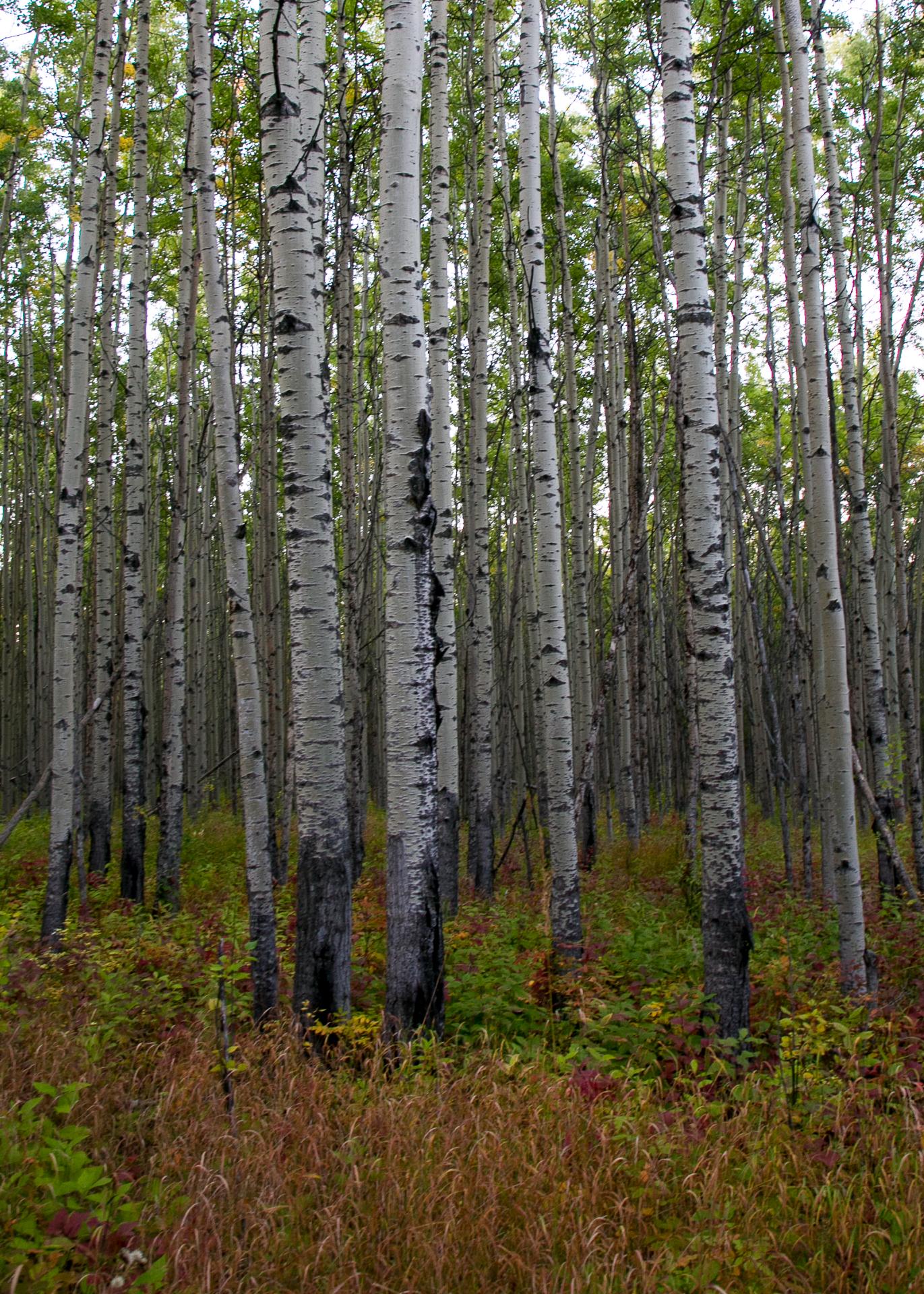 Yukon D16-66.jpg