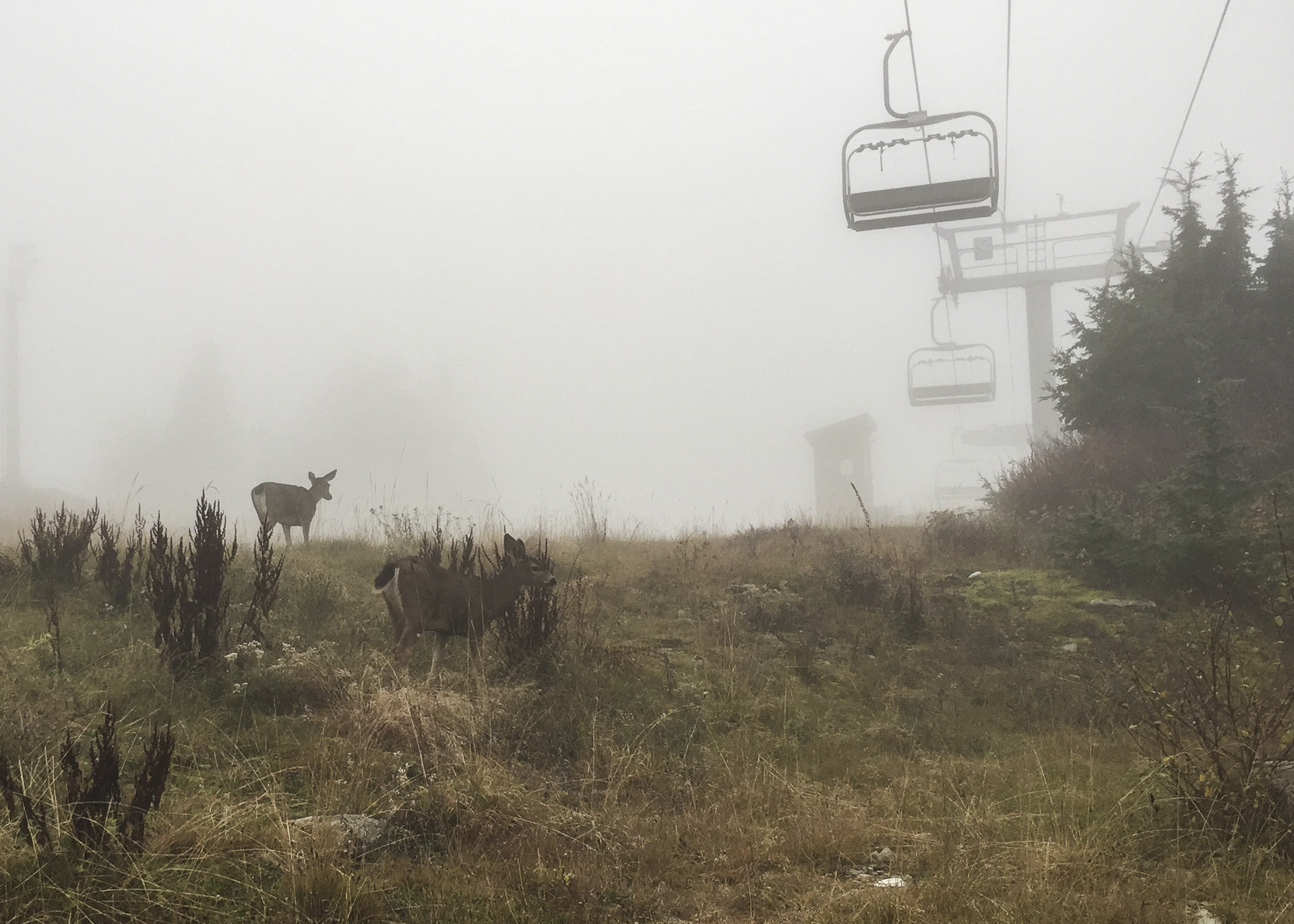 There were even some deer wandering about, not really that afraid of anyone.
