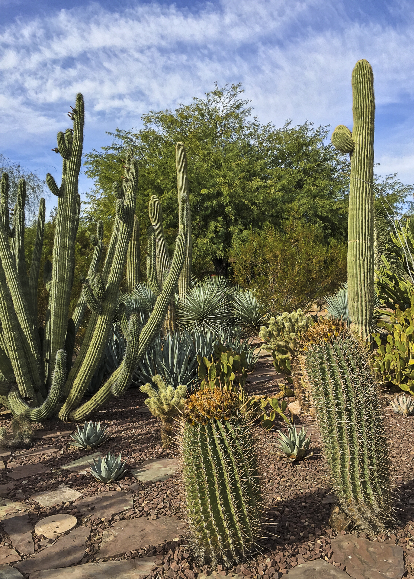 A whole series of different cacti - so cool!