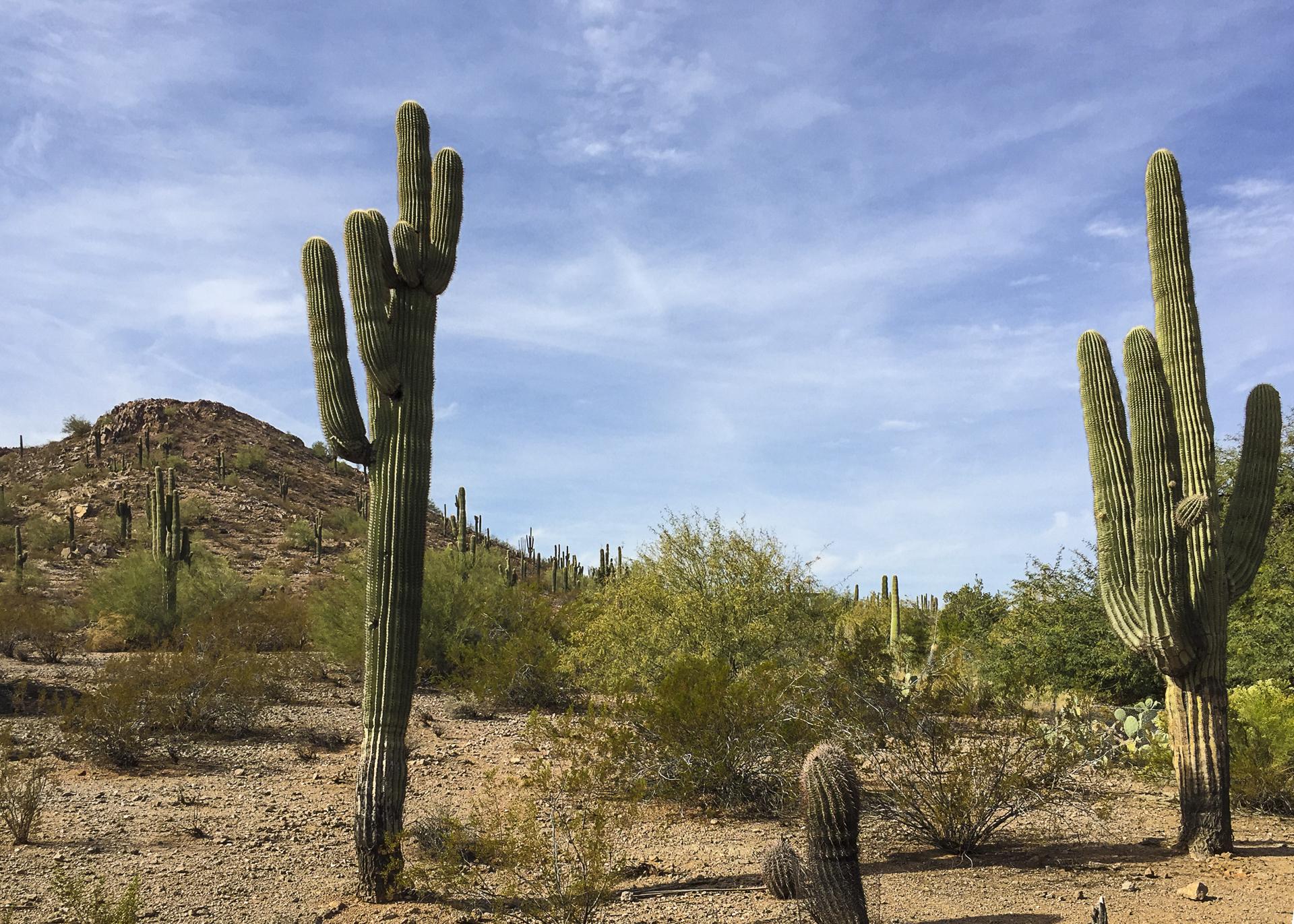 Scottsdale-7.jpg