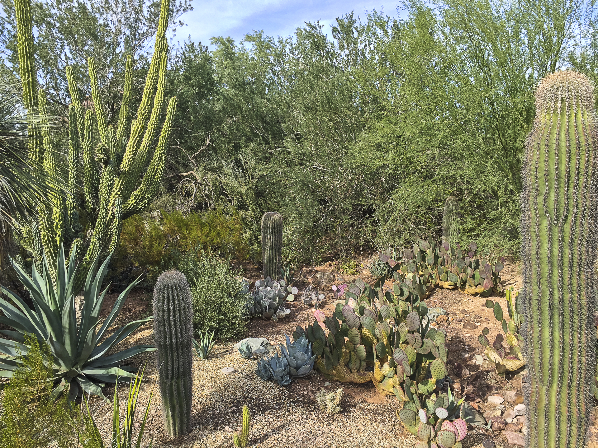 Scottsdale-8.jpg