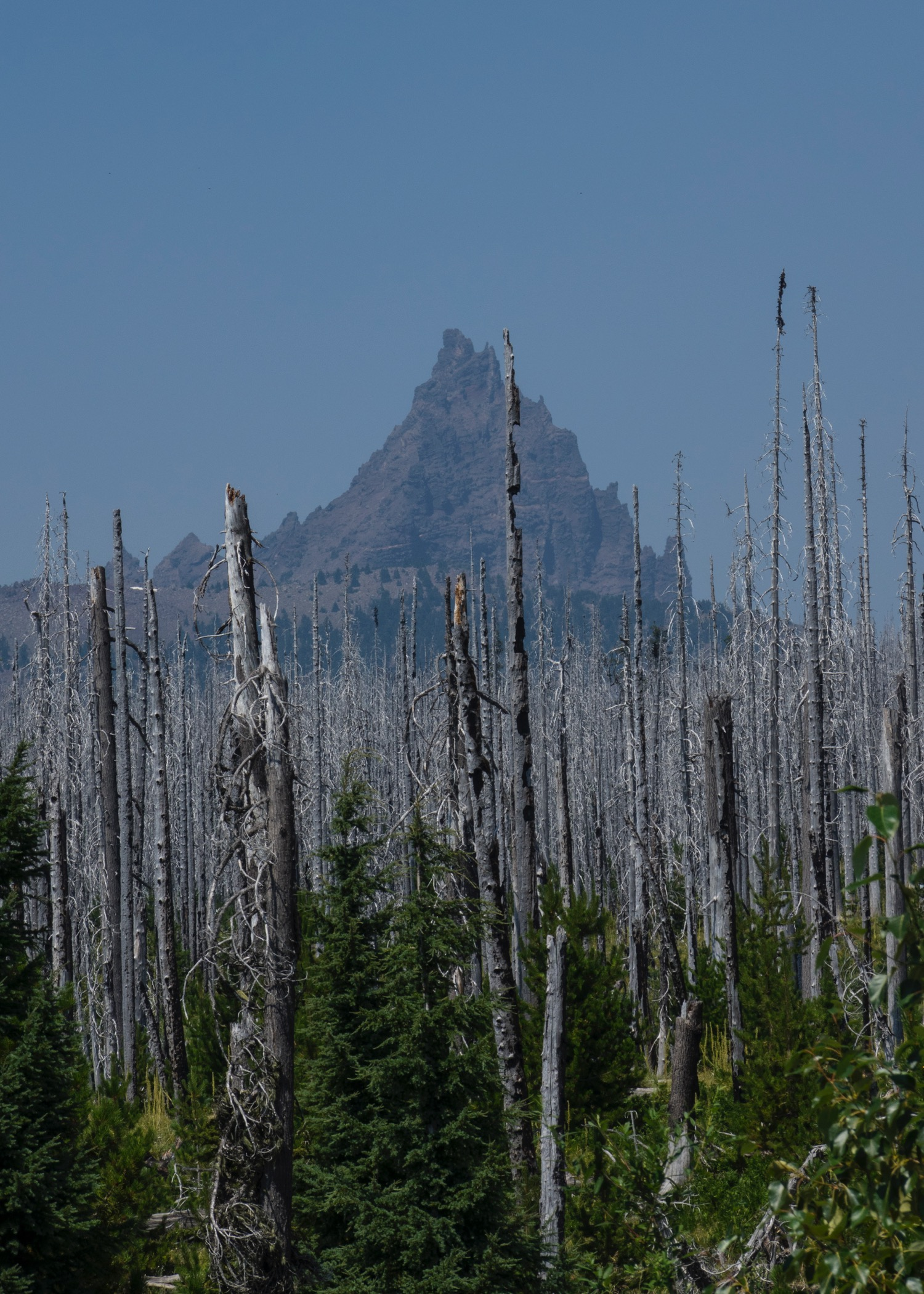 There had already been a huge fire in this area in the not-too-distant past. Mount Jefferson (I think) in the background.