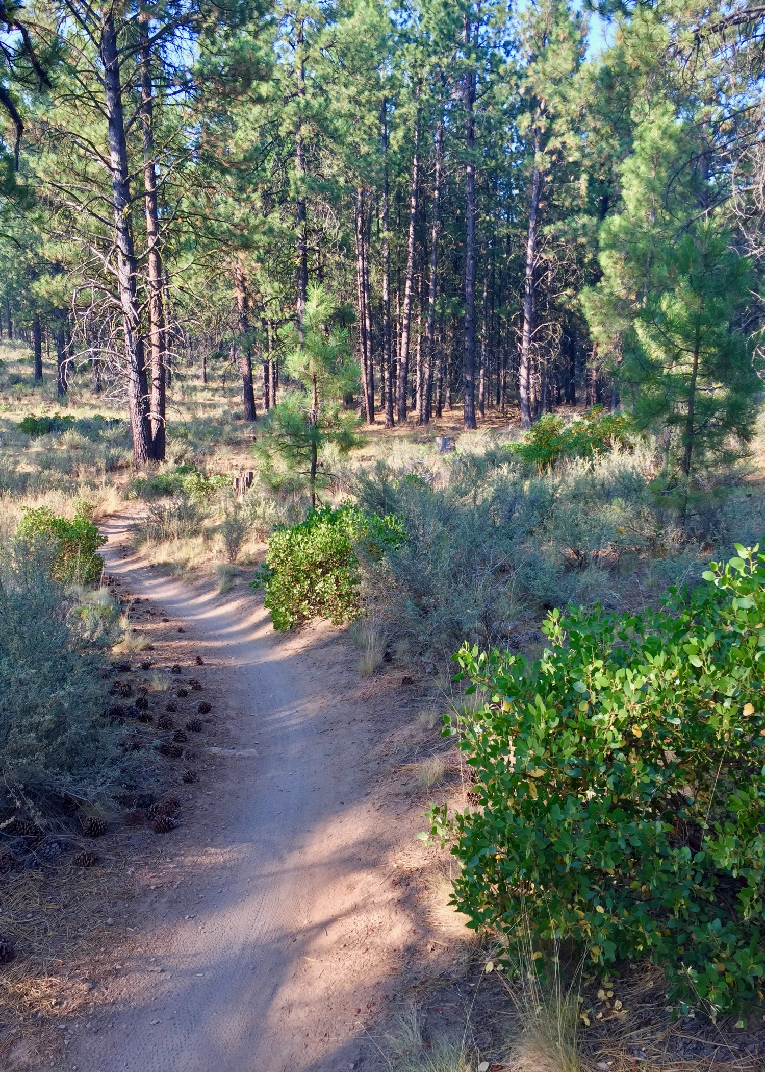 Fast, flowy trails through the pine forest - amazing!