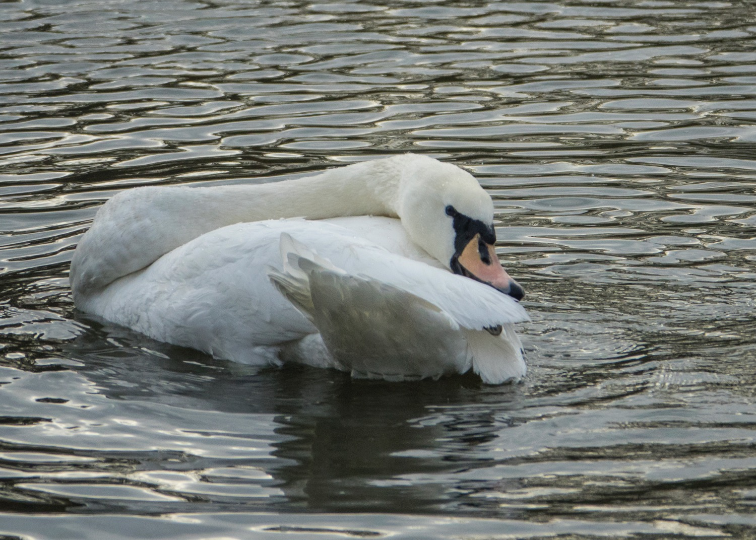 And there were swans