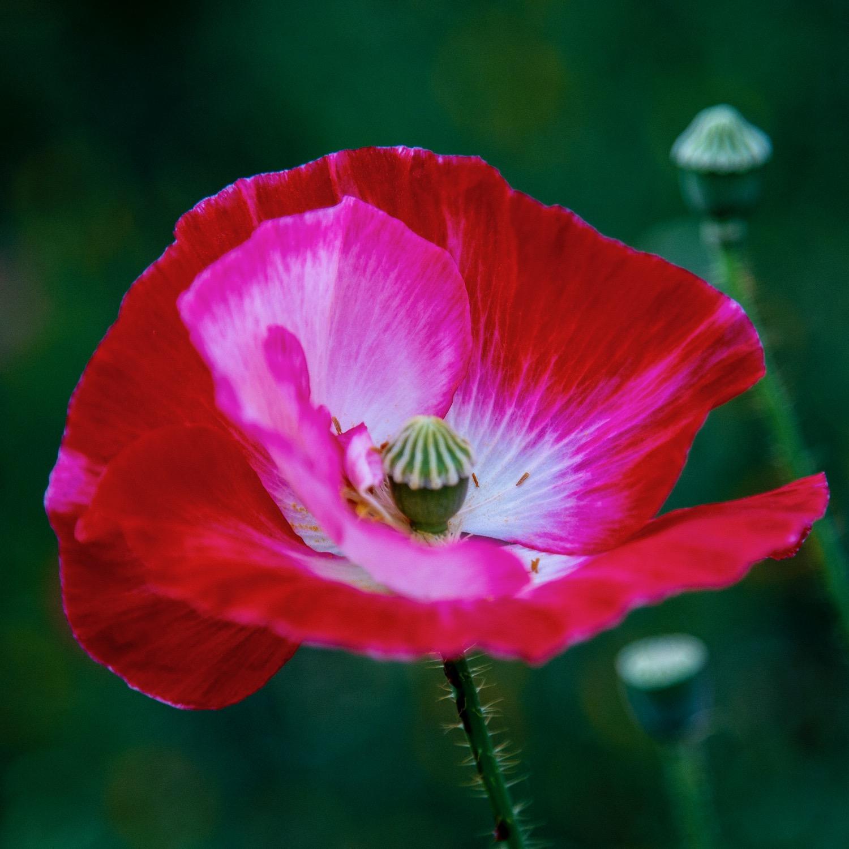 Vancouver Wildflowers - 5.jpg