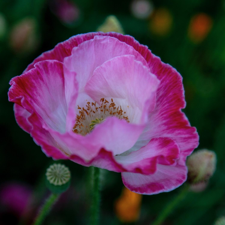 Vancouver Wildflowers - 6.jpg