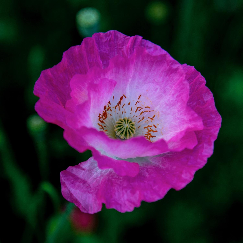 Vancouver Wildflowers - 15.jpg