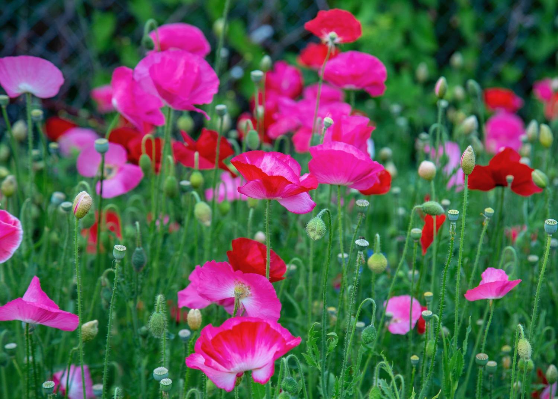 Vancouver Wildflowers - 4.jpg