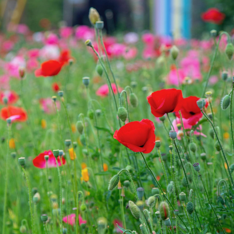 Vancouver Wildflowers - 1.jpg