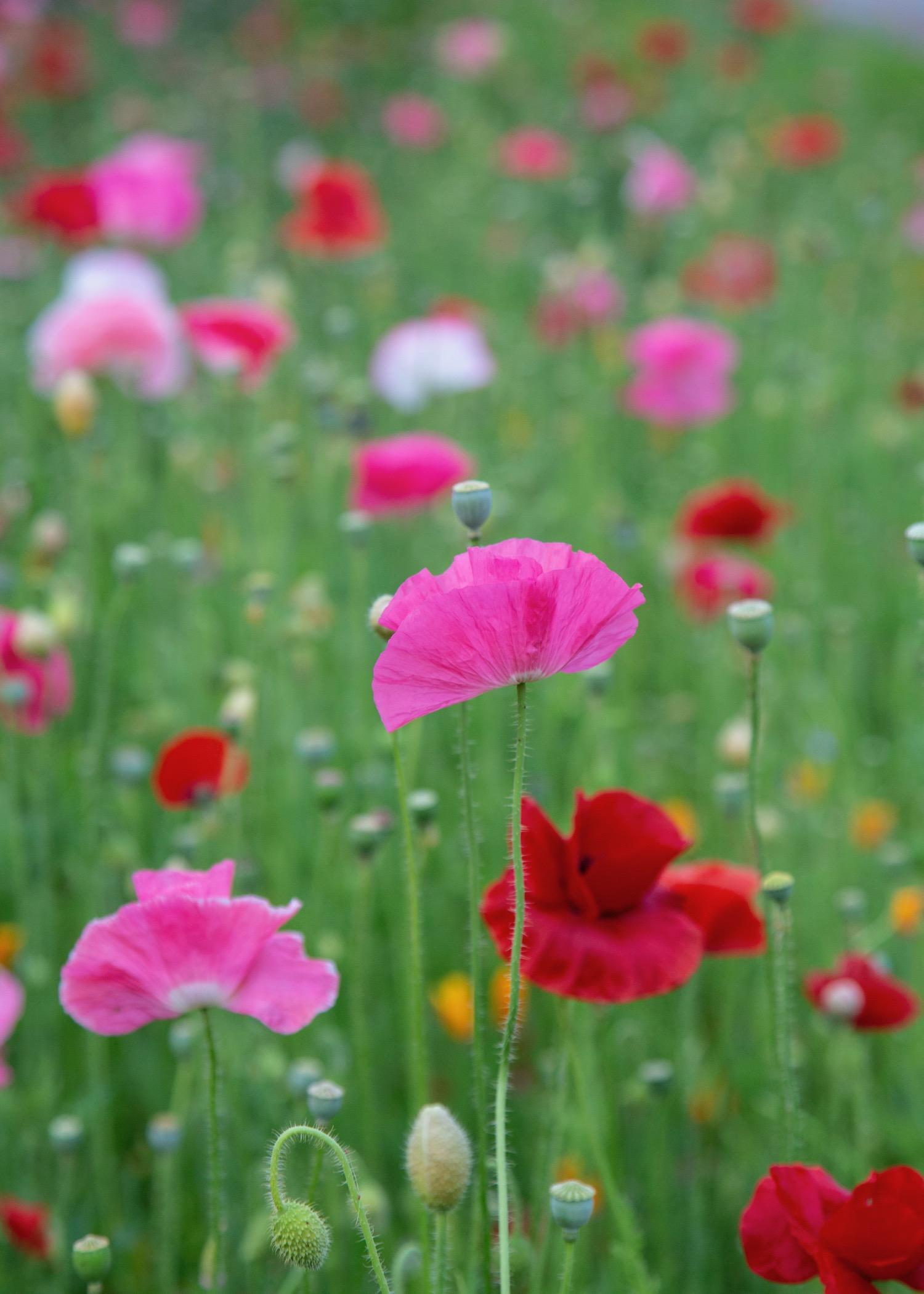 Vancouver Wildflowers - 2.jpg