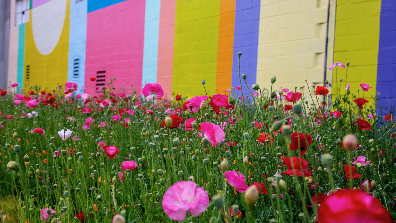 Vancouver Wildflowers - 8.jpg