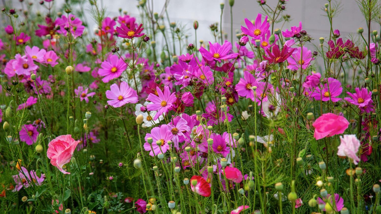 Vancouver Wildflowers - 12.jpg