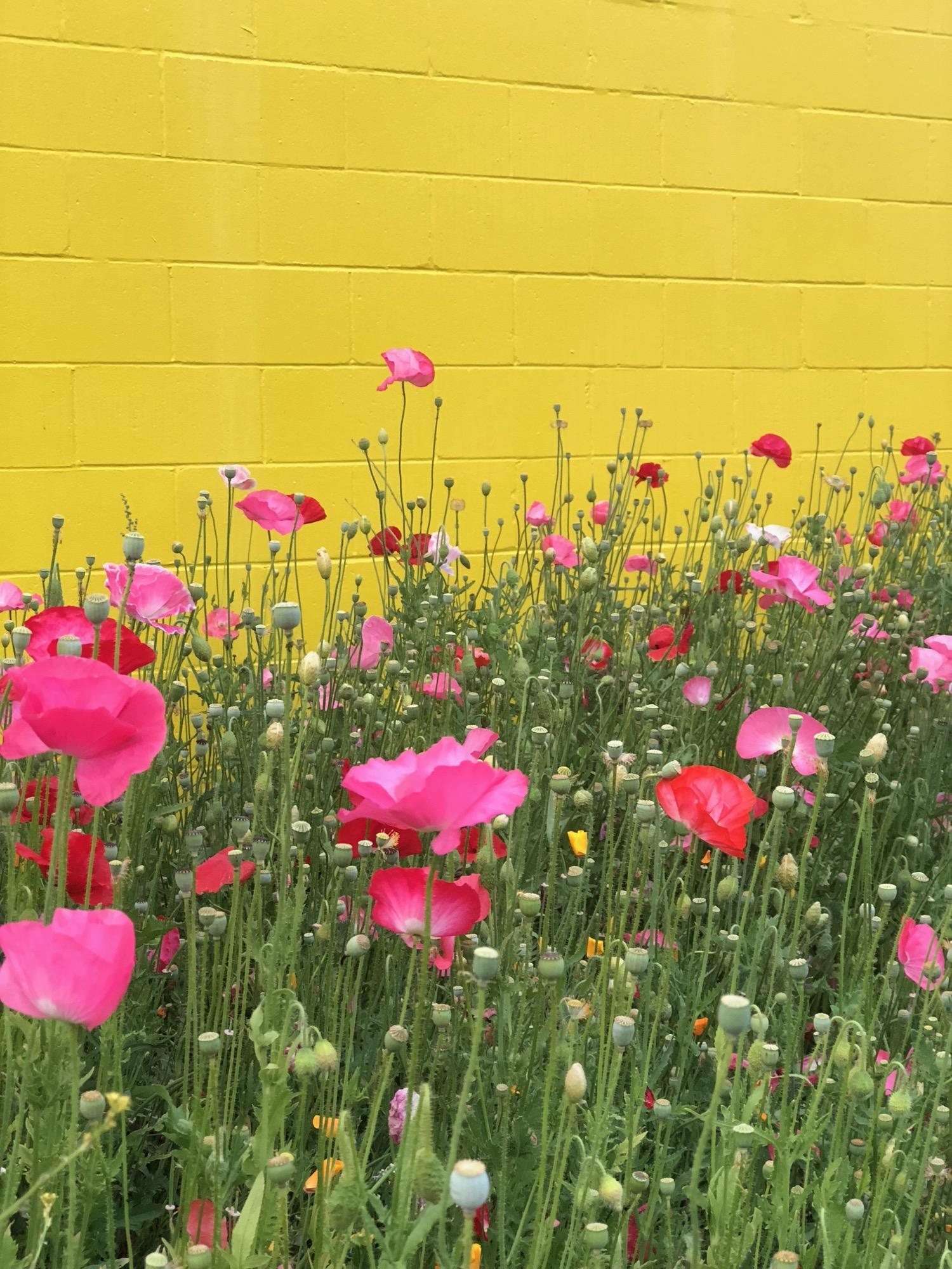 Vancouver Wildflowers - 13.jpg
