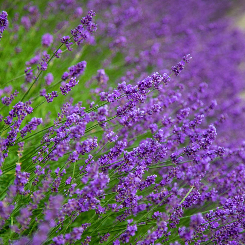 Vancouver Wildflowers - 22.jpg