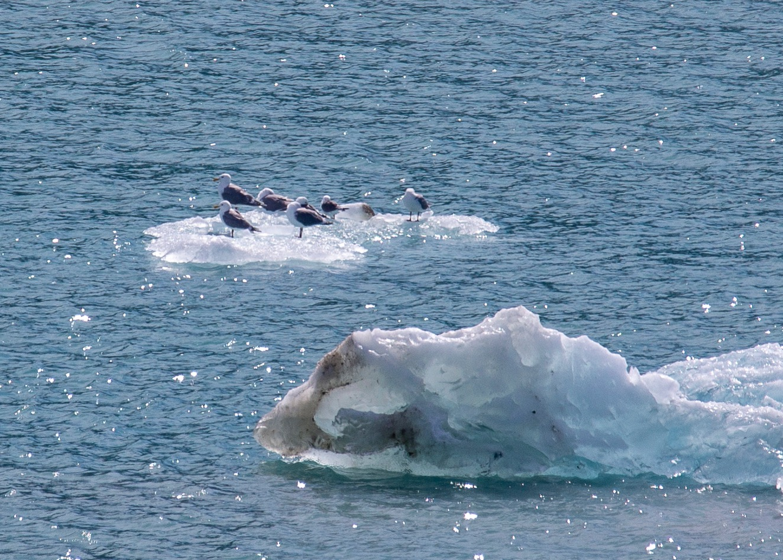 Hubbard Glacier - 57.jpg
