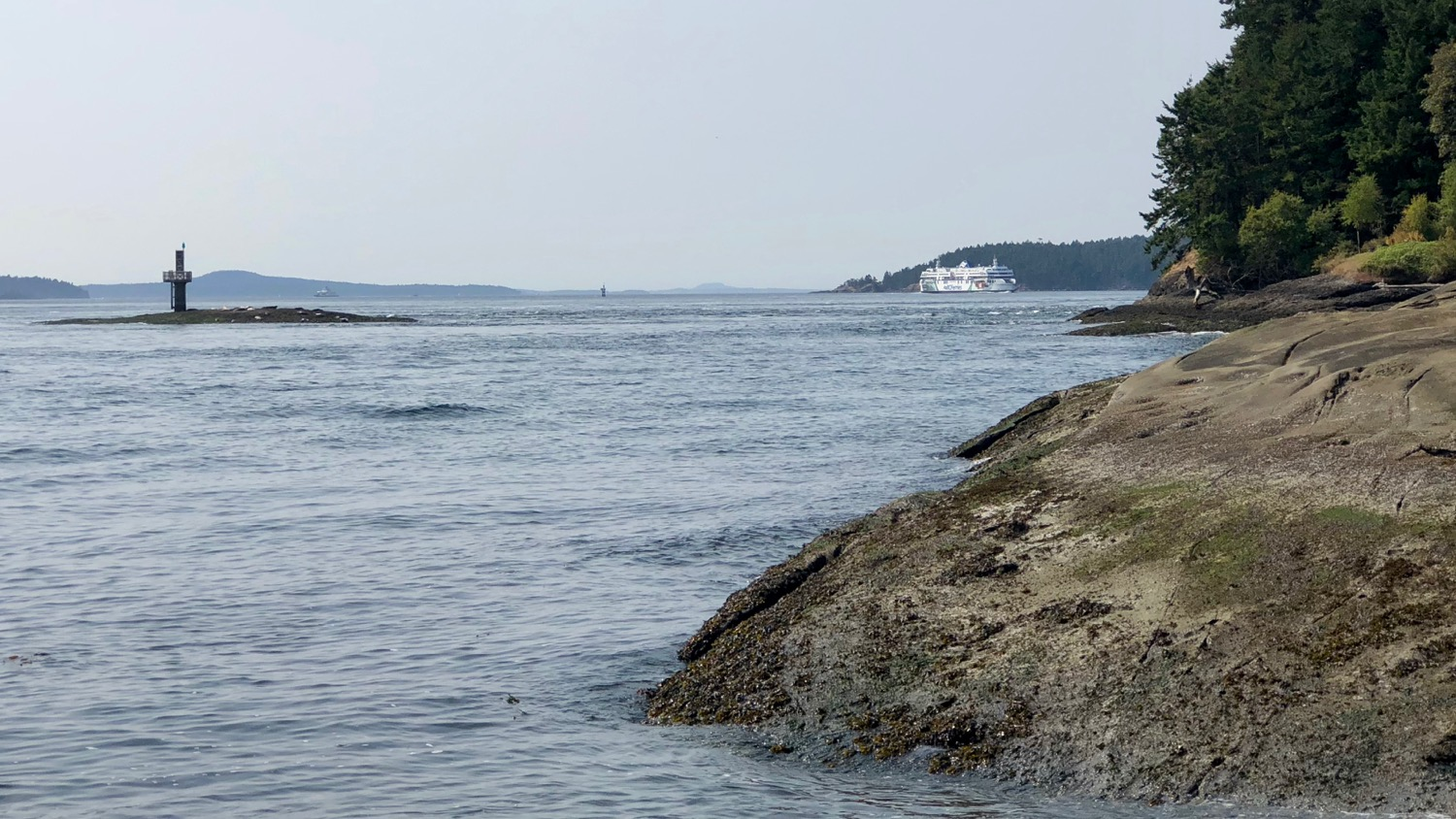 Those small white dots out on the island in Active Pass are all harbour seals, pulled up on the rocks.