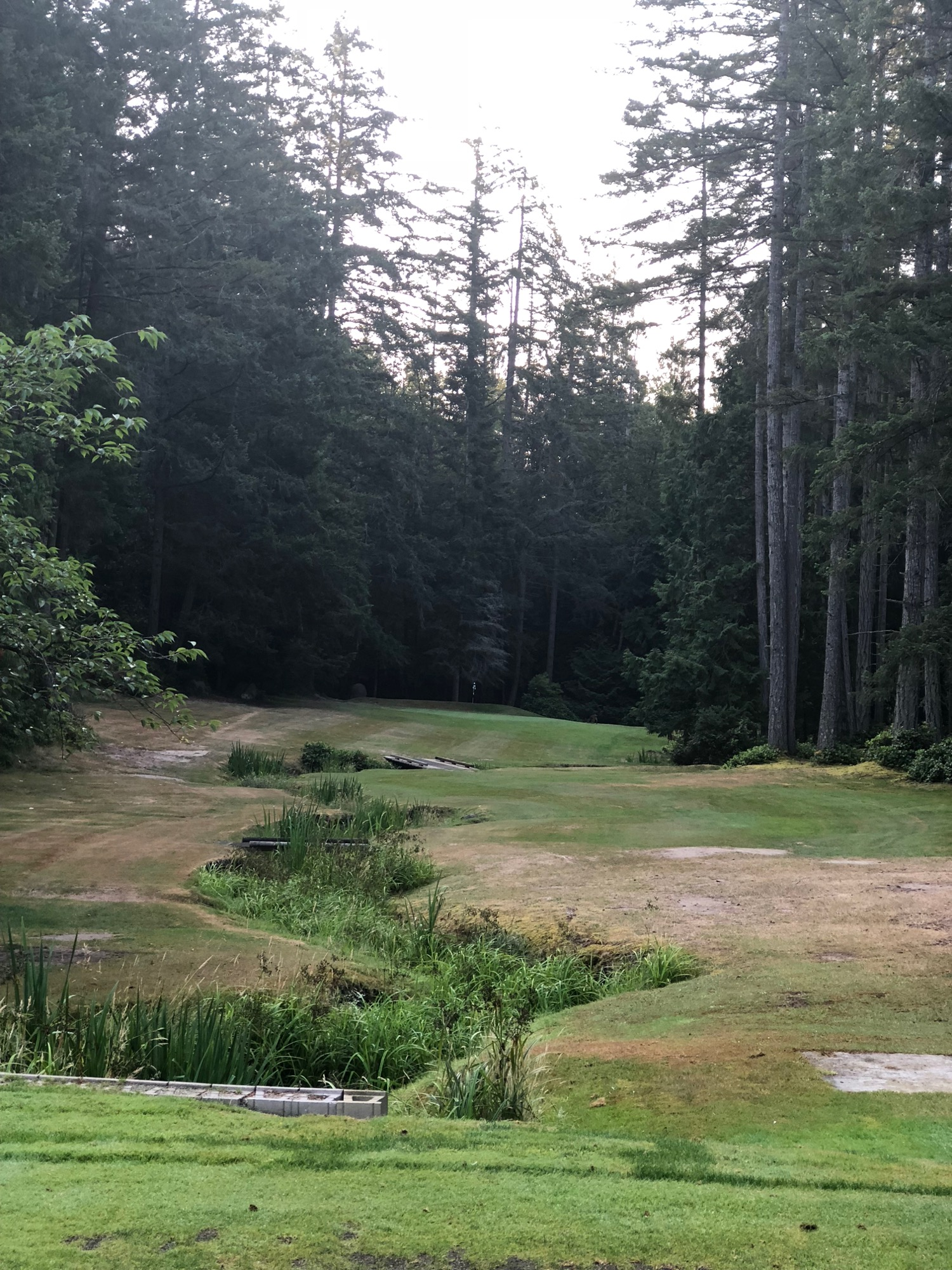 The very fun 3rd hole - there were 4 deer on this one.