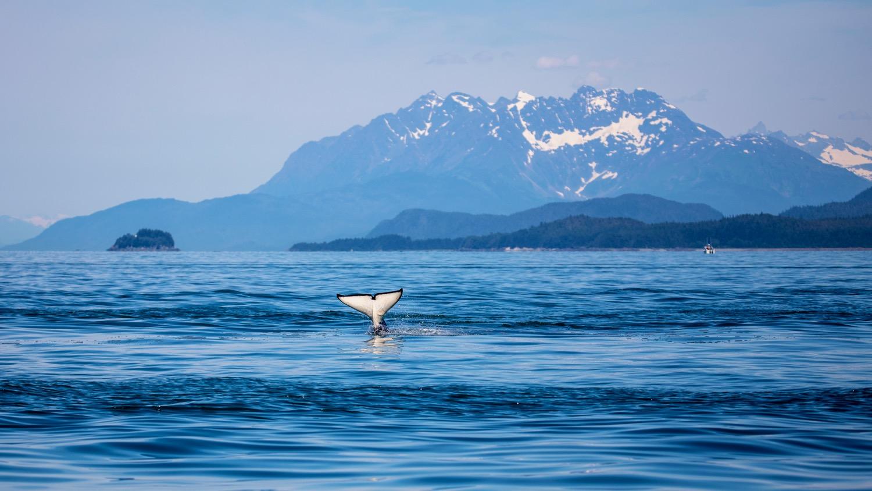 Juneau Alaska - 30.jpg