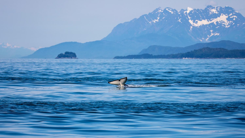 Juneau Alaska - 32.jpg